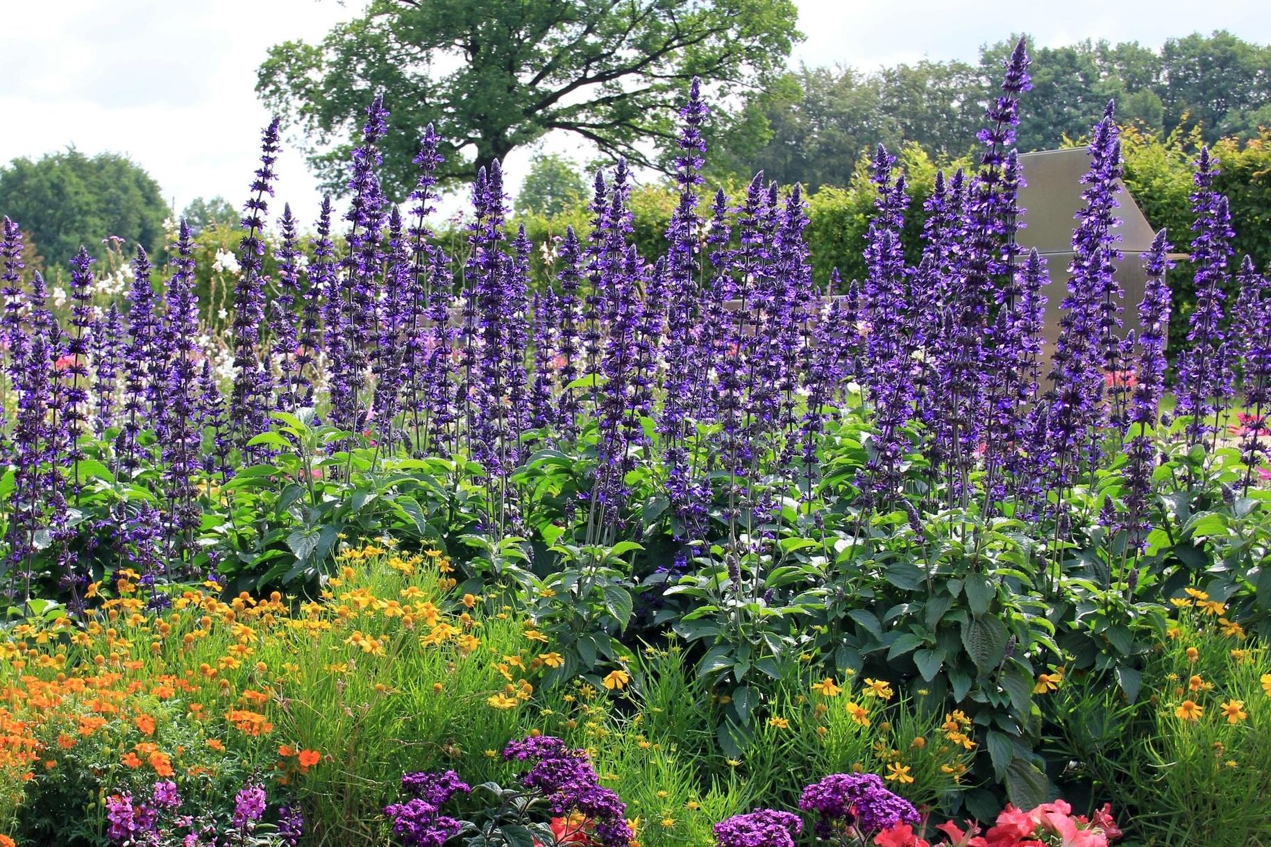 flowers-204162.jpg