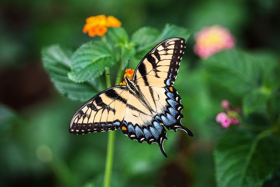 butterfly-1391809_960_720.jpg