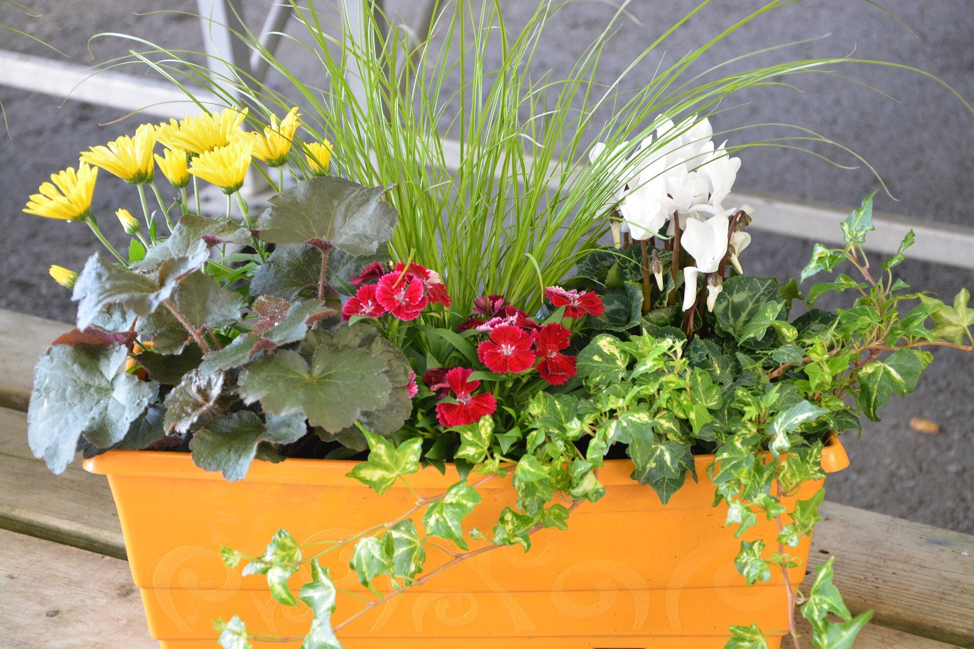 potted flowers-2688083_1920.jpg