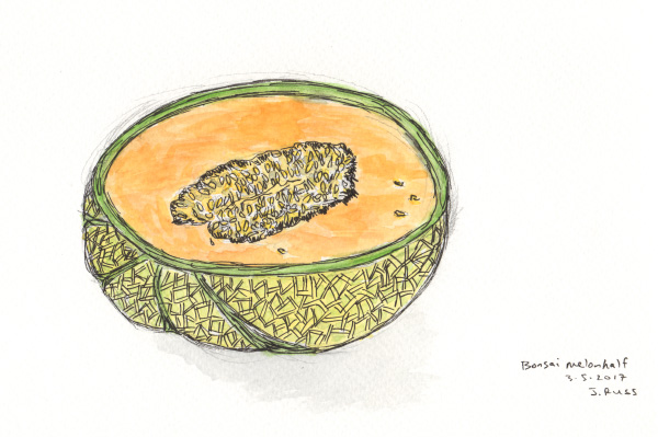 """Pencil, pen, and watercolor. """"Bonsai melon half"""" from Trader Joe's. March 2017. Copyright © 2017 Jennifer Russ, All Rights Reserved."""