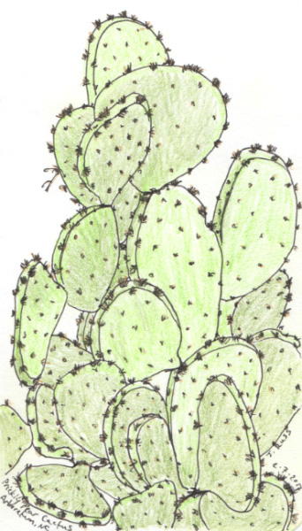 Pen and colored pencil of a prickly pear cactus at the WNC Arboretum.  February 2017 Asheville, NC.  Copyright © 2017 Jennifer Russ, All Rights Reserved.
