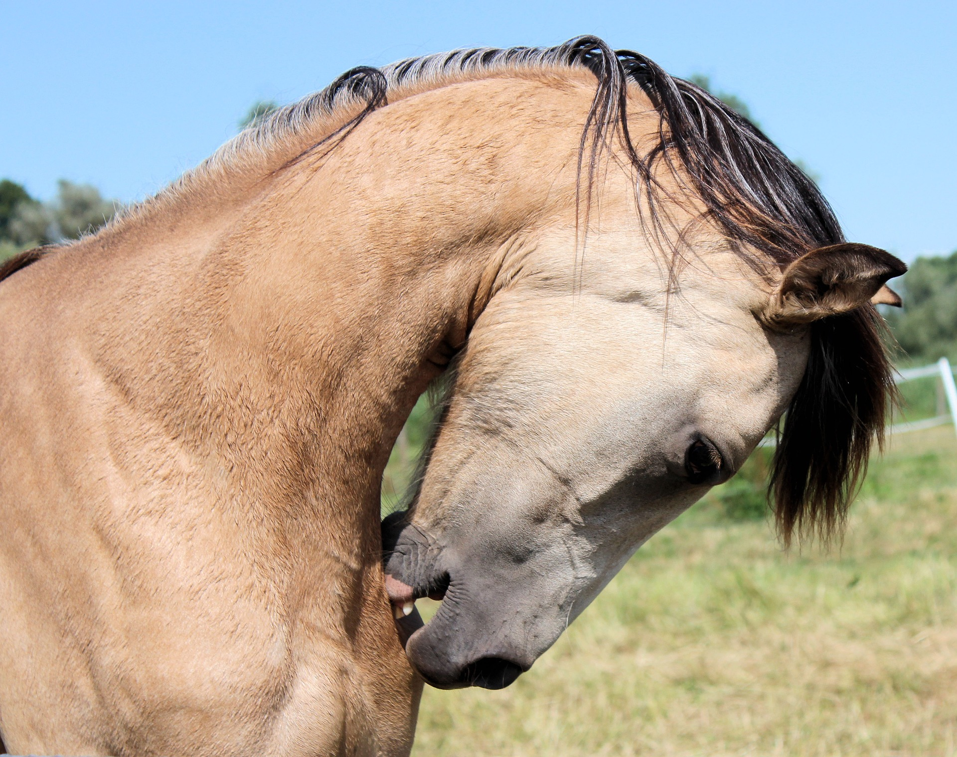 Bugs are a real nuisance for any horse, be sure to inspect before and after turnout for any bites that have become inflamed, are bleeding or causing discomfort.