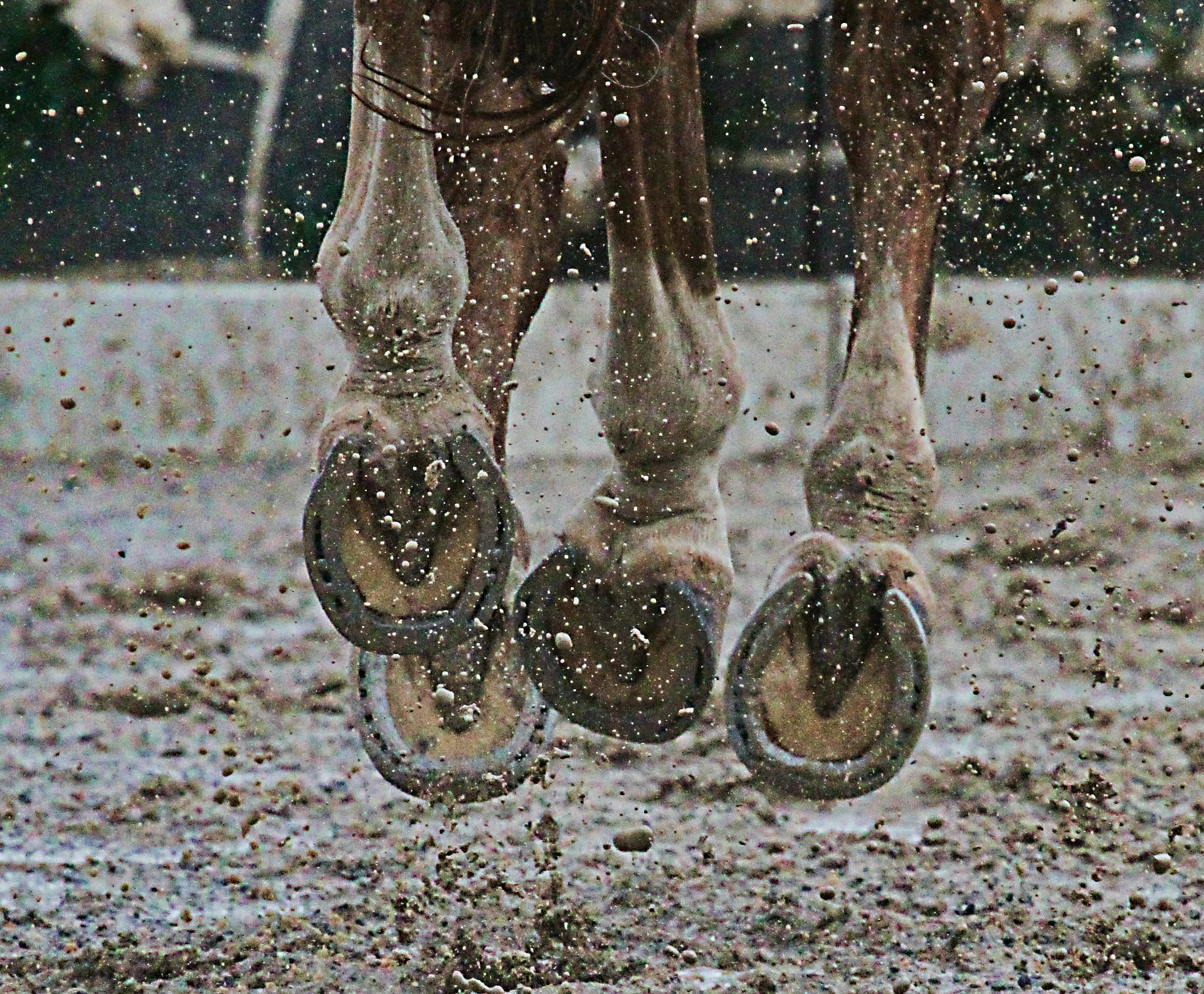 Mud and rain are common environmental factors that cause the bacteria to flare up and cause scratches in horses.