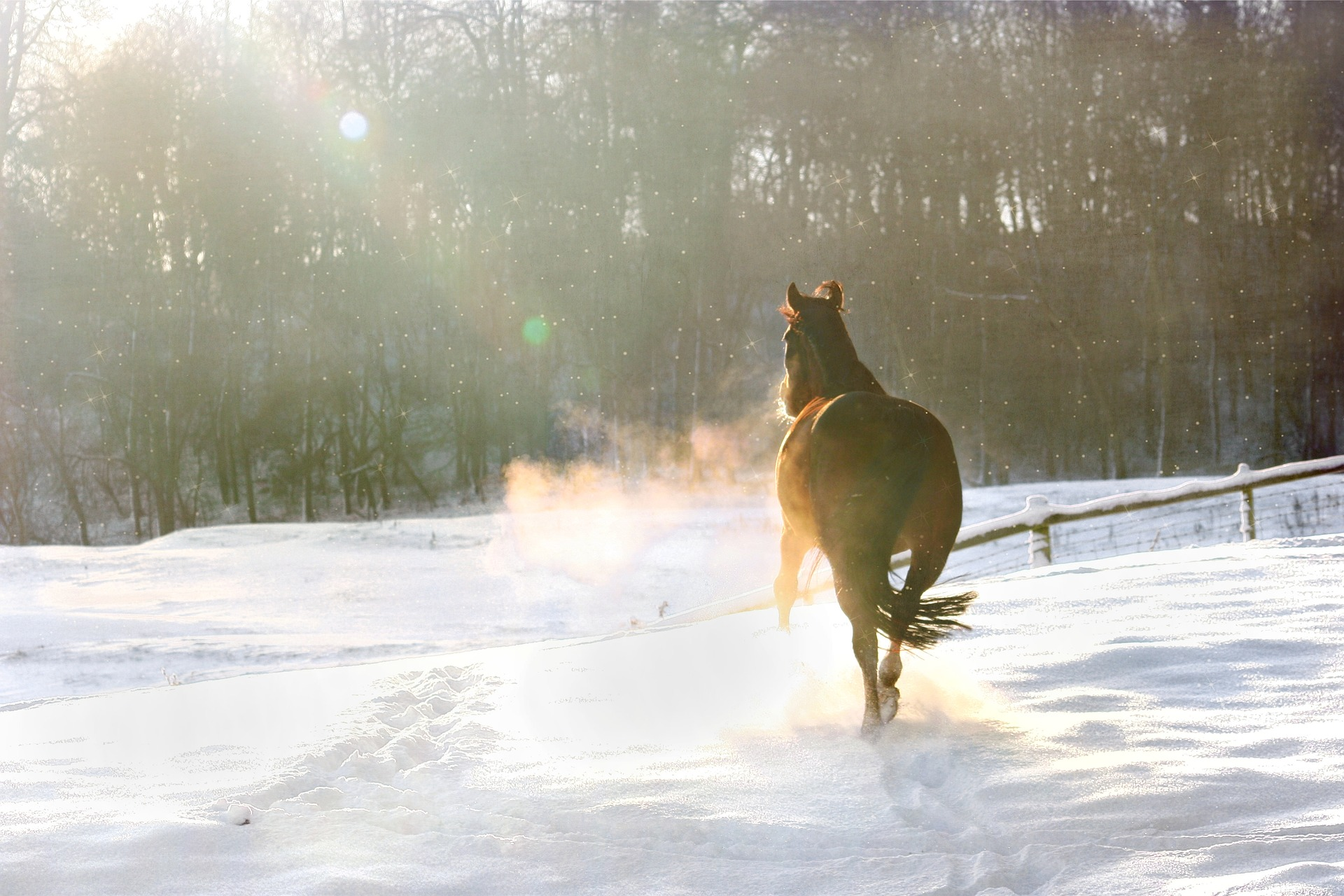 Winter. Come for the beauty,stay for the... no, don't stay. Take your horse and head south!