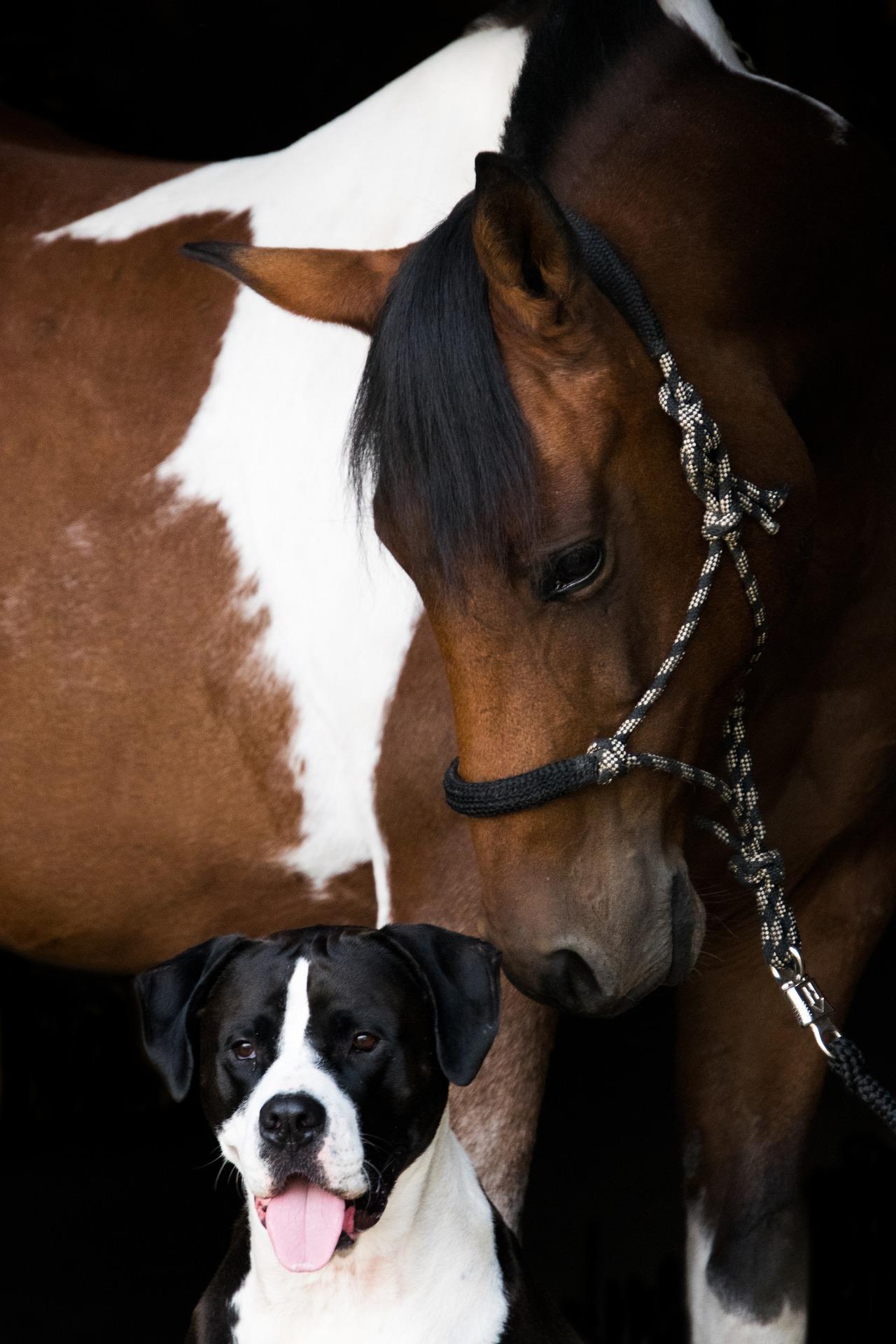 coat_defense_horse_and_dog