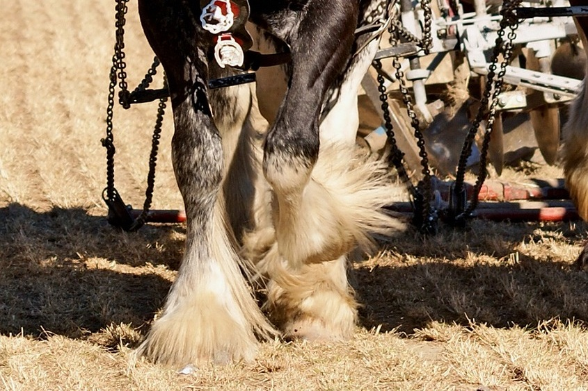 Heavy Feathers - How to apply COAT DEFENSE® to horse breeds with heavy feathers.