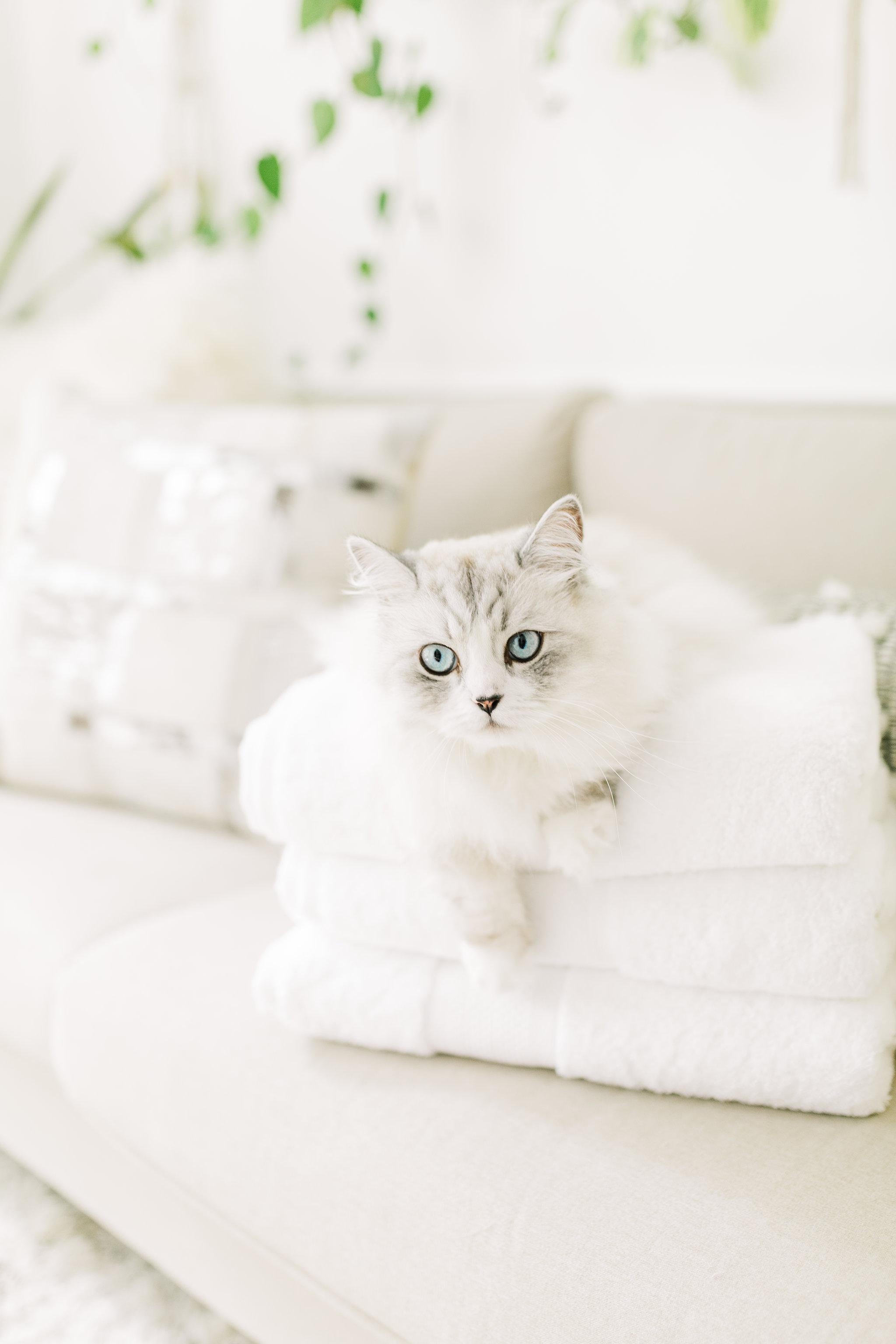Joyfullygreen The Company Store Legends Sterling Bath Towels Cat Lady.jpg