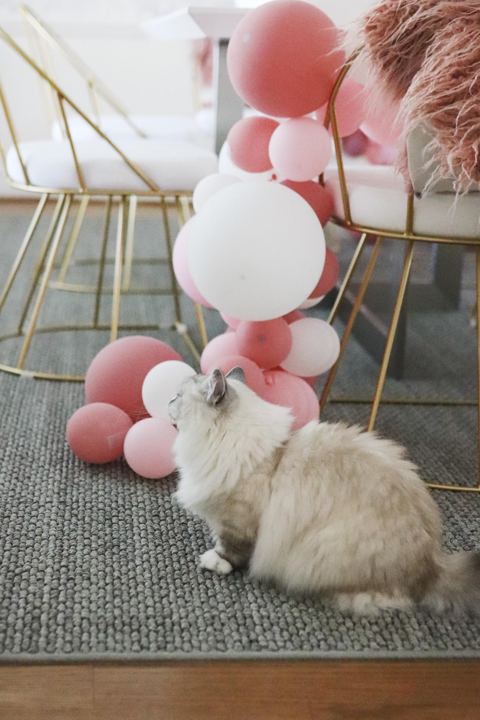 Dining Room Make over before after wallpaper ballon garland munchkin cat