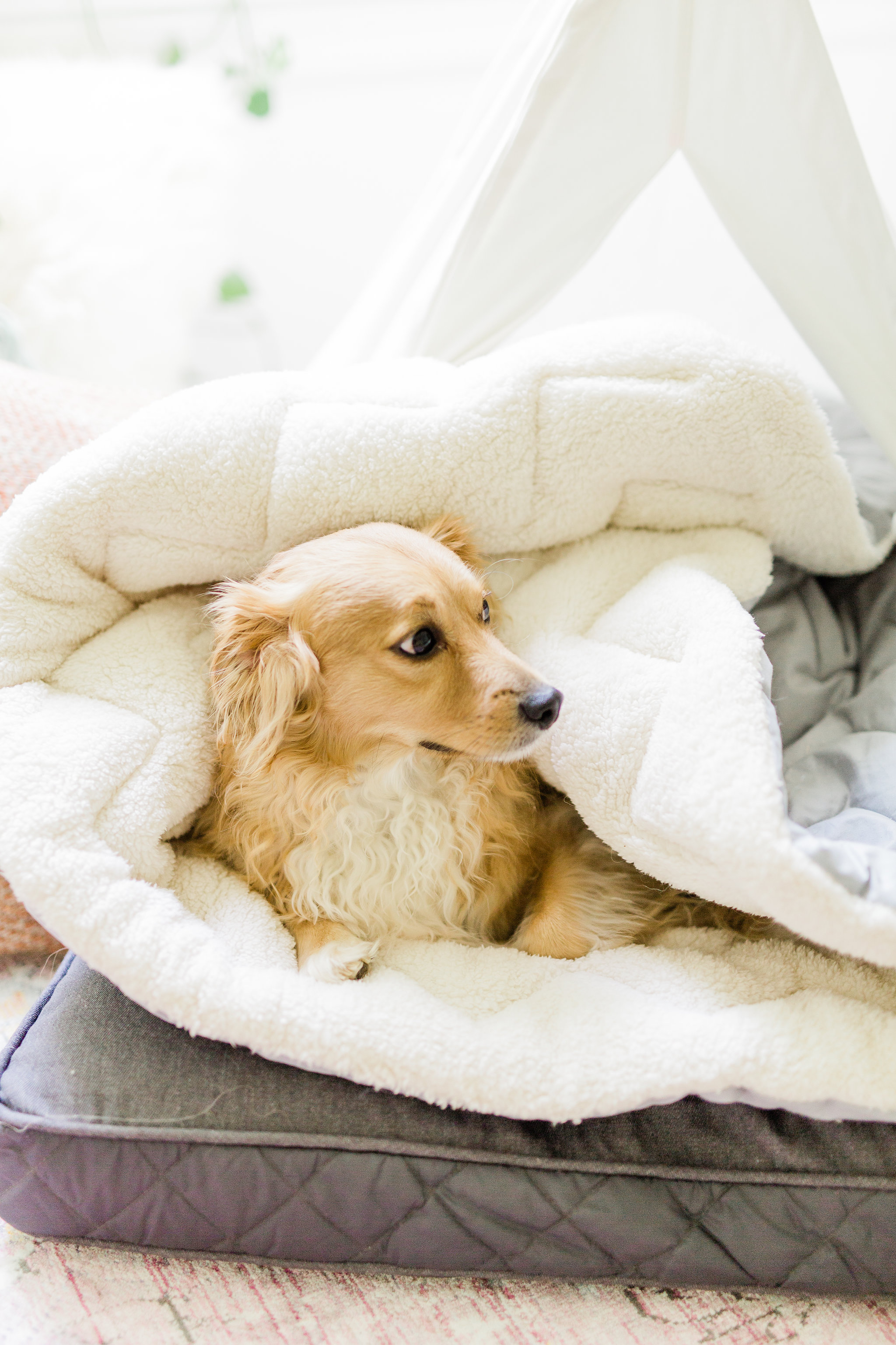 3 ways to create a welcoming and relaxing space for your new puppy on National Dog Day Pet Teepee Dog Bed Mid Century Nursery decor ideas