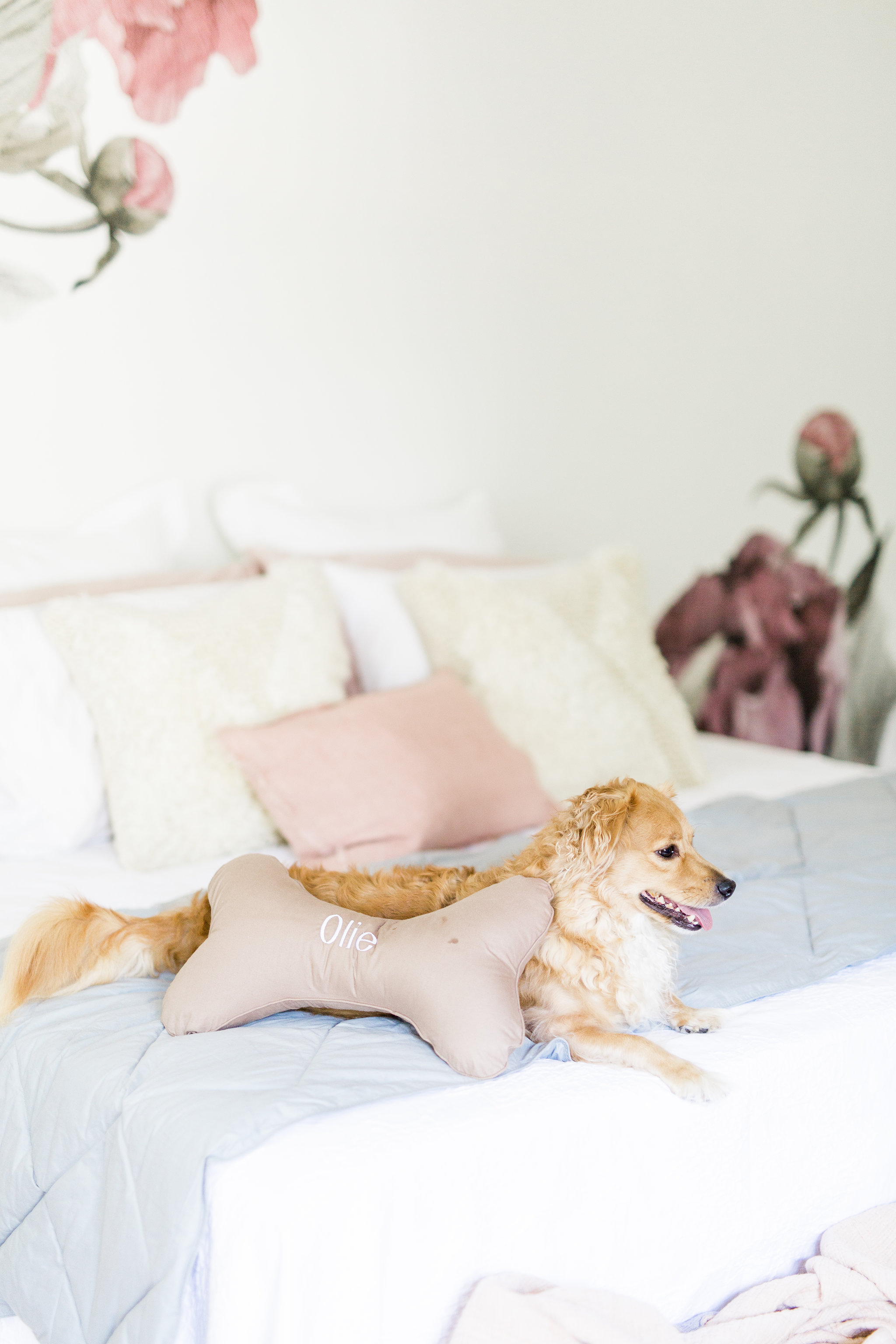3 ways to create a welcoming and relaxing space for your new puppy on National Dog Day Pet Teepee Dog Bed decor ideas