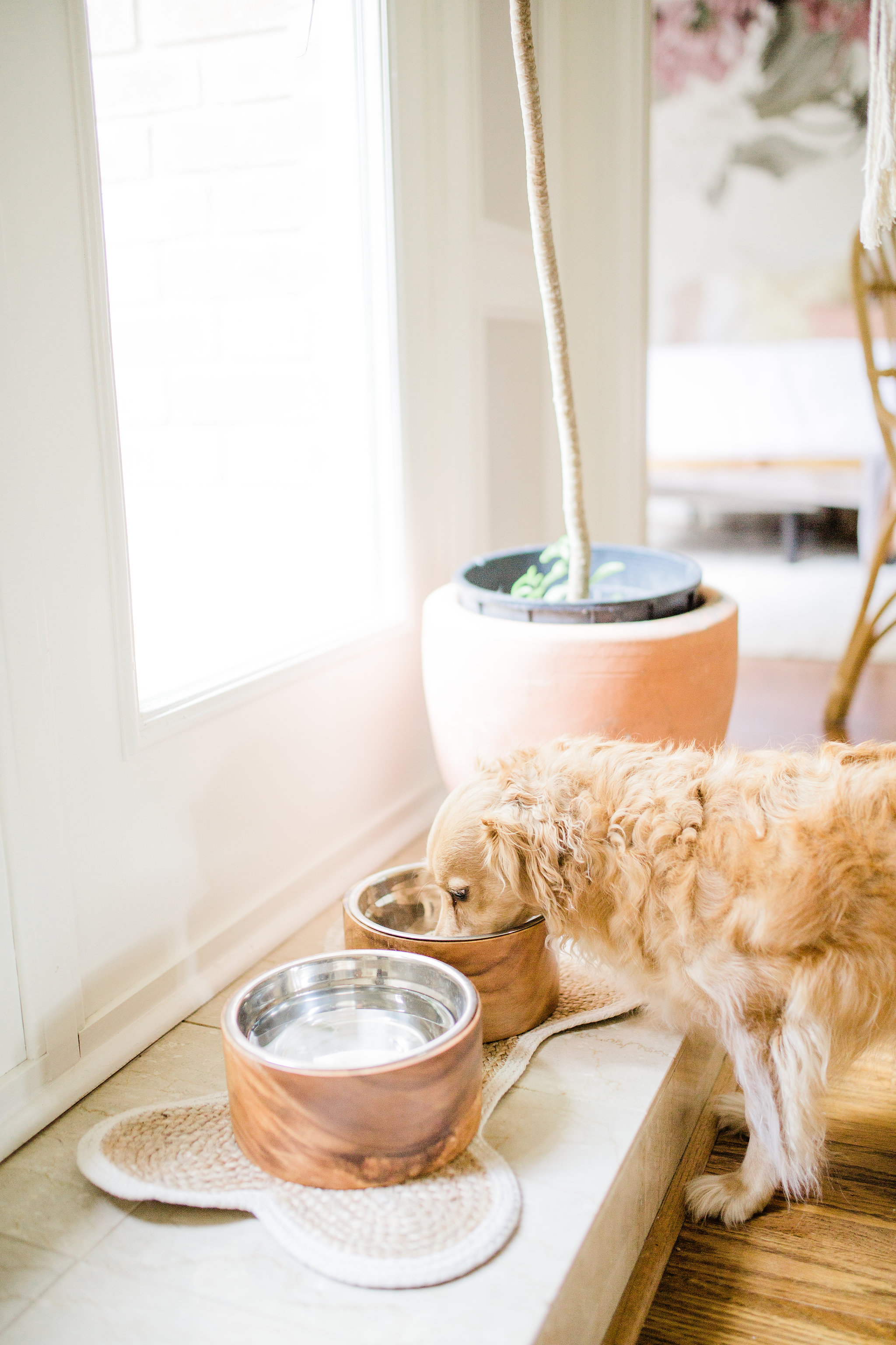 3 ways to create a welcoming and relaxing space for your new puppy on National Dog Day Pet Teepee Dog Bed decor ideas best wooden dog food bowl
