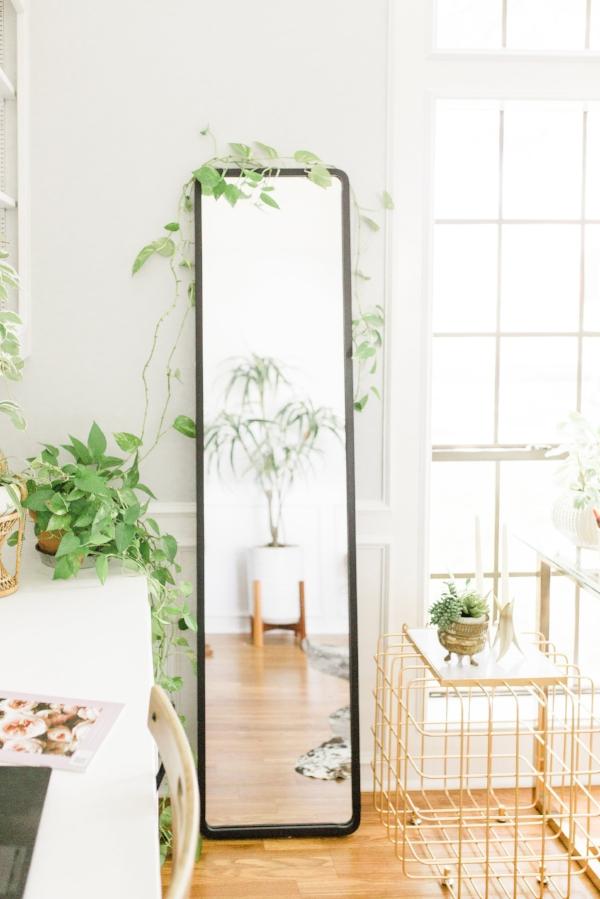 Pothos Vine 3 house plants you won't kill plant shopping with joyfully green