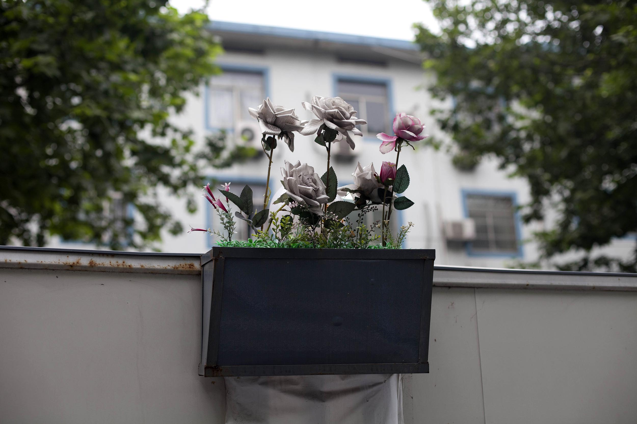 A photograph of plastic roses in Hangzhou, China  Photography for Personal Project