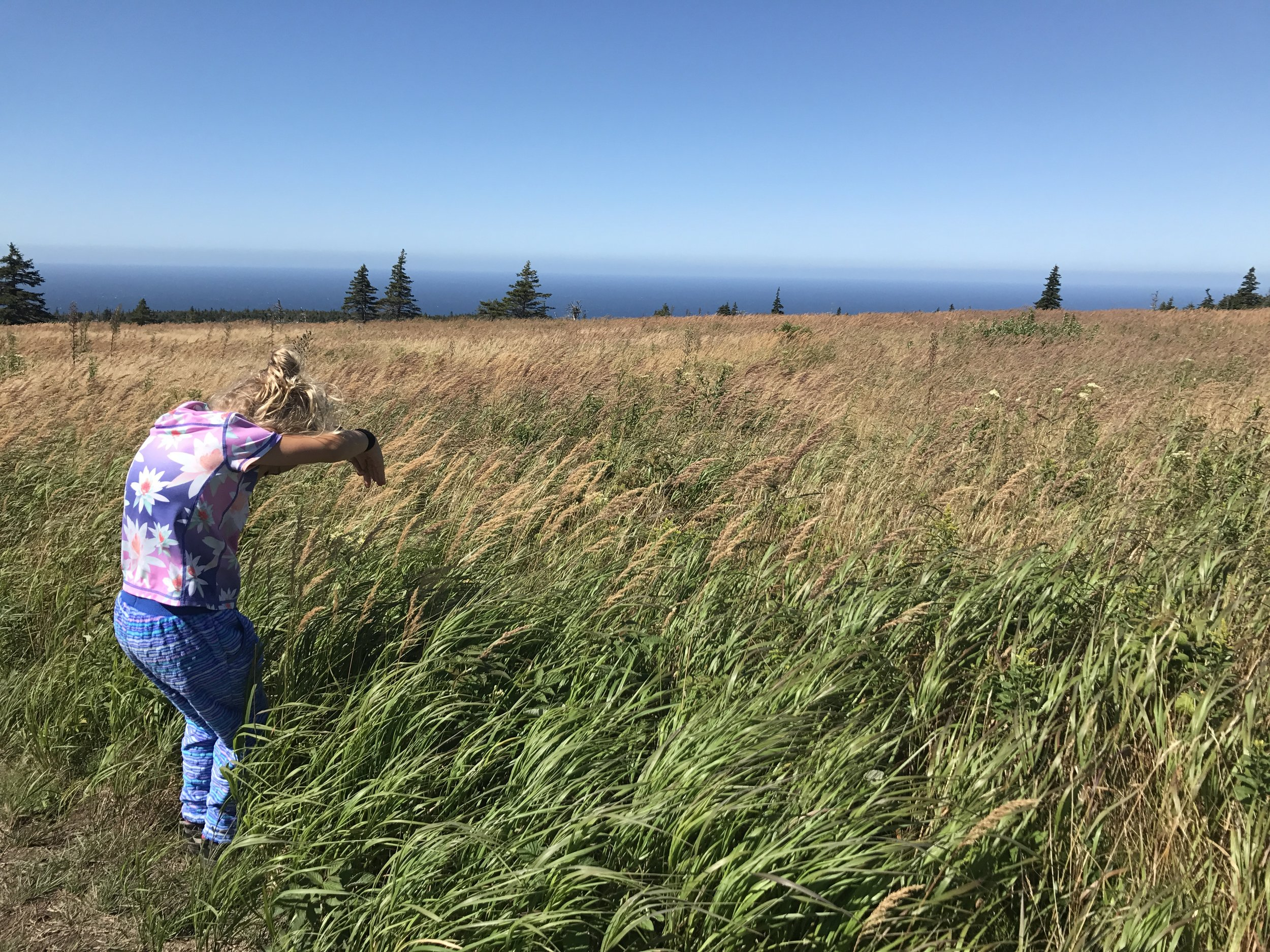 It was breezy on the trail and the grass showed it. This is Ellie's interpretation.