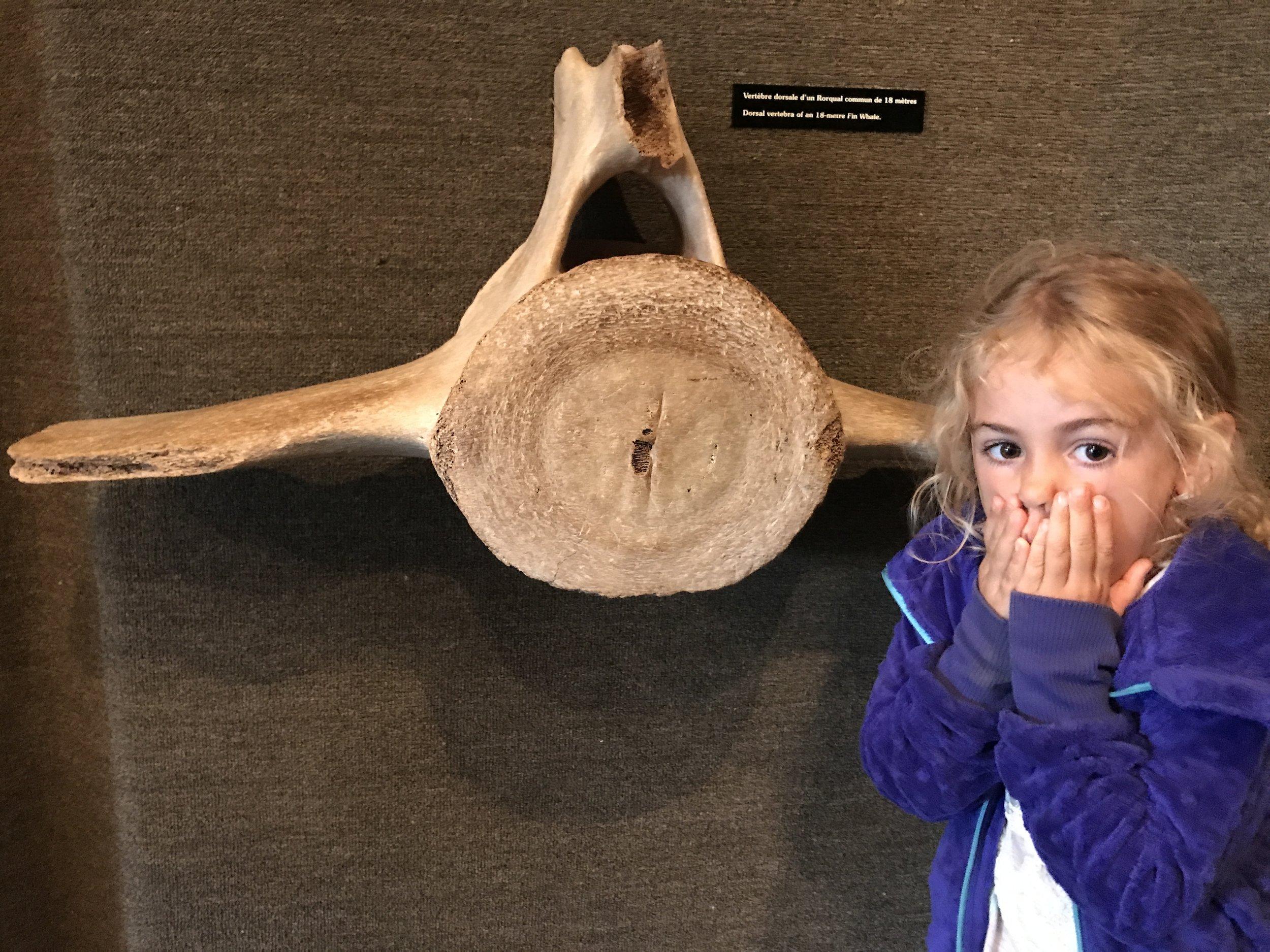 Wow! A whale vertebrae is huge! Forillon Interpretive Centre.