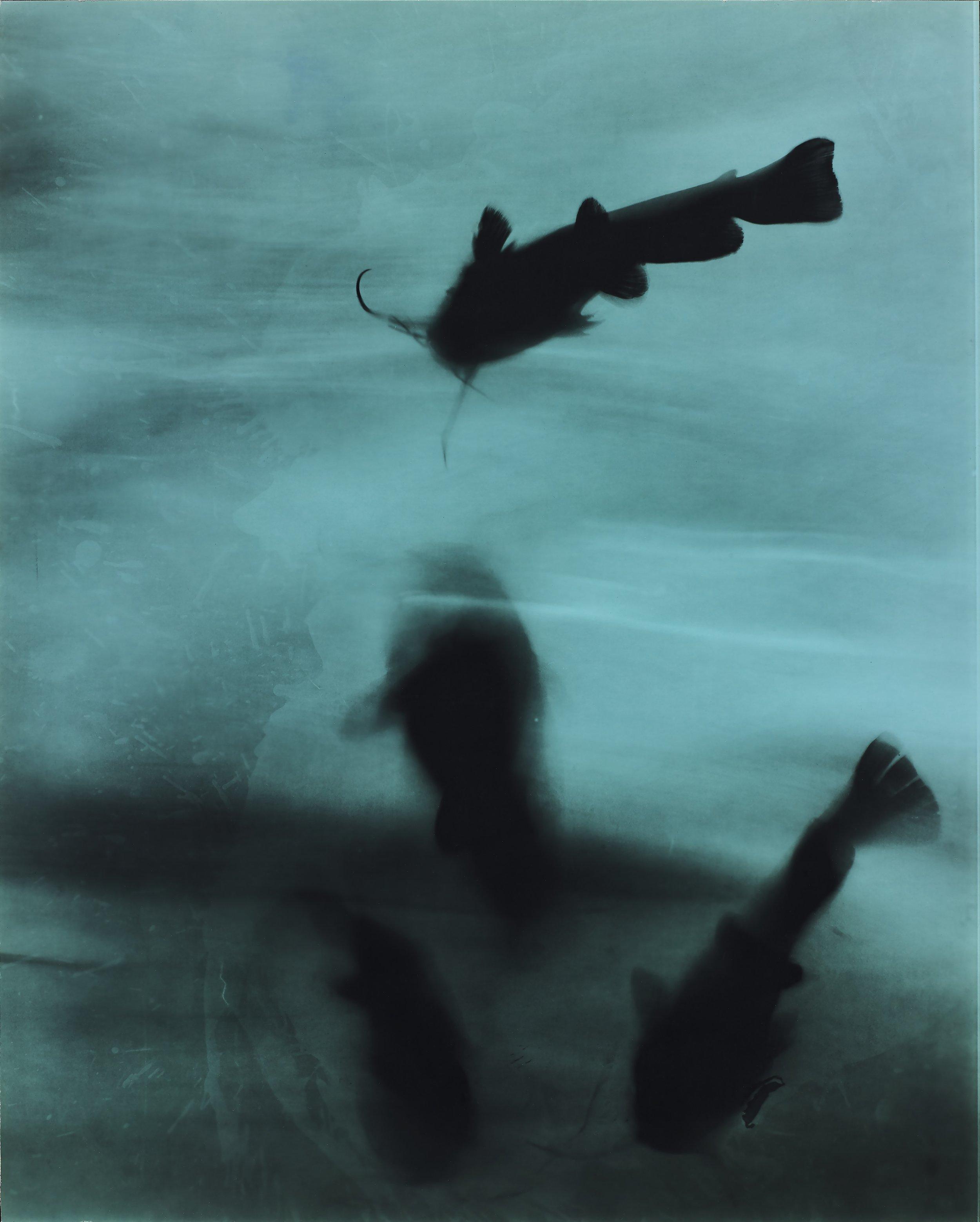 4 catfish, 1996