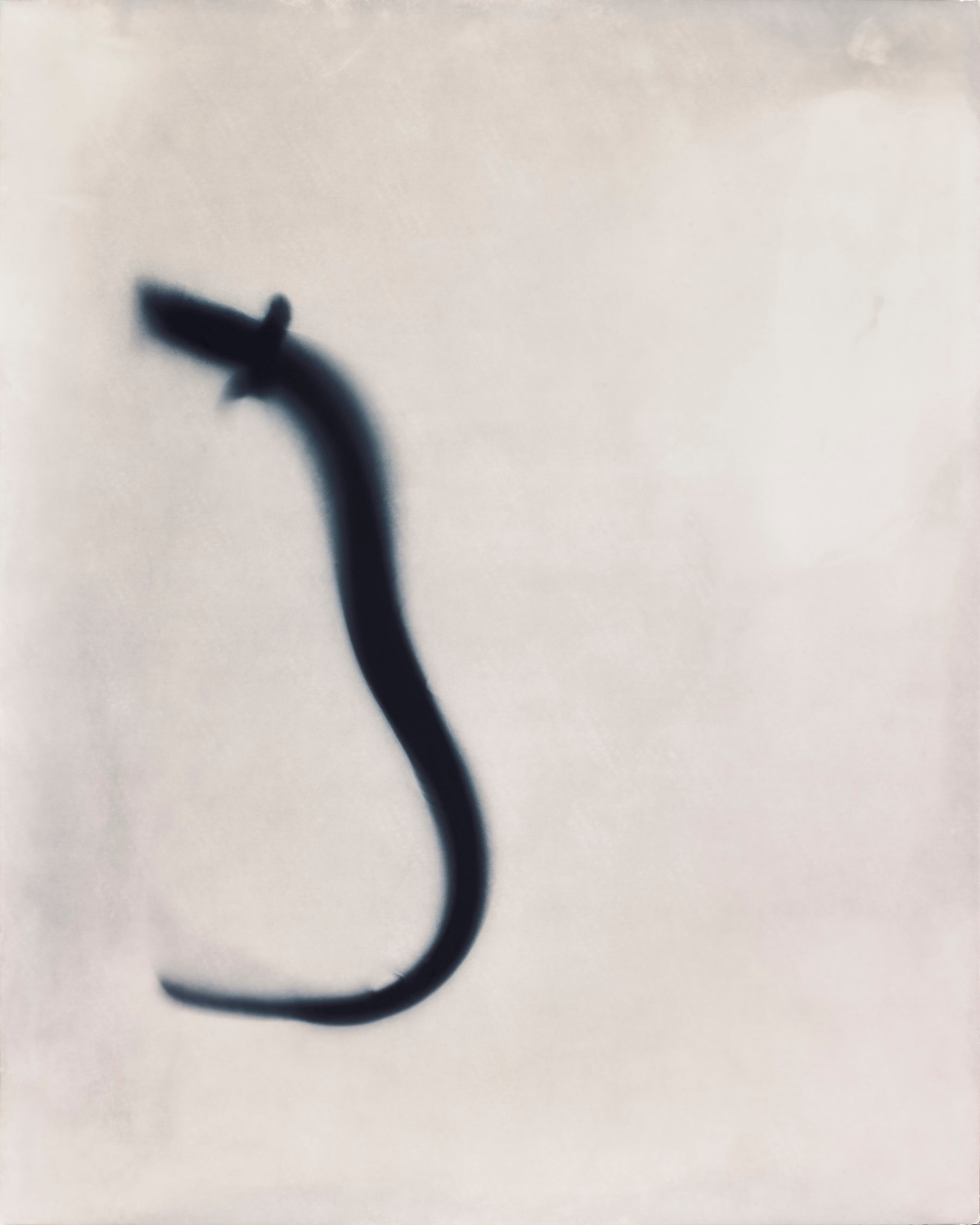 Eel Study Positive AP, 1997