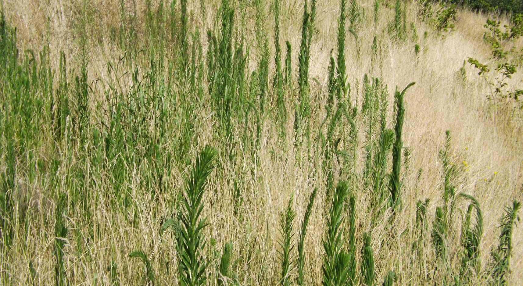 BrandeisSciCtr_grass.jpg