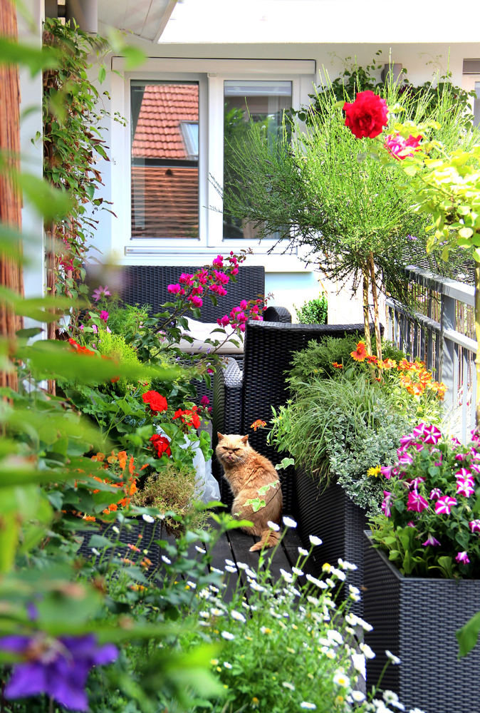 Flowers-and-cat-on-balcony