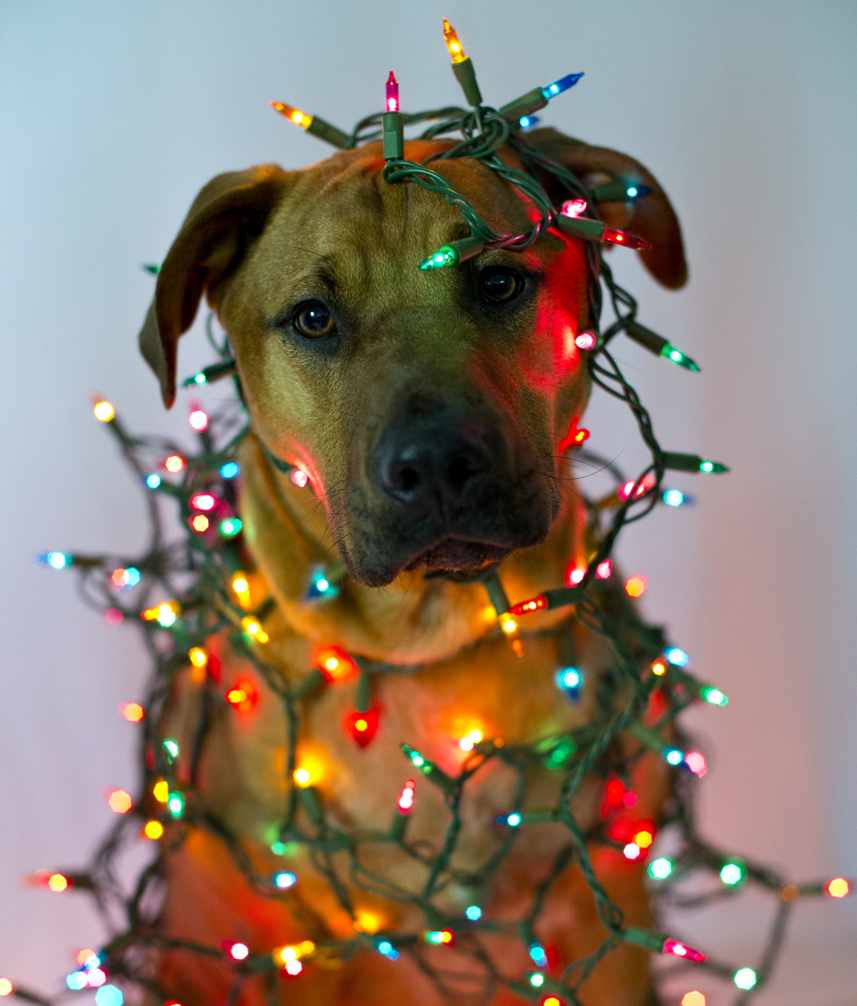 dog-with-light-strings