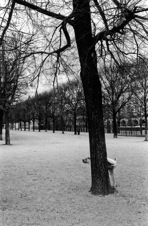 Paris chien, Paris 2004