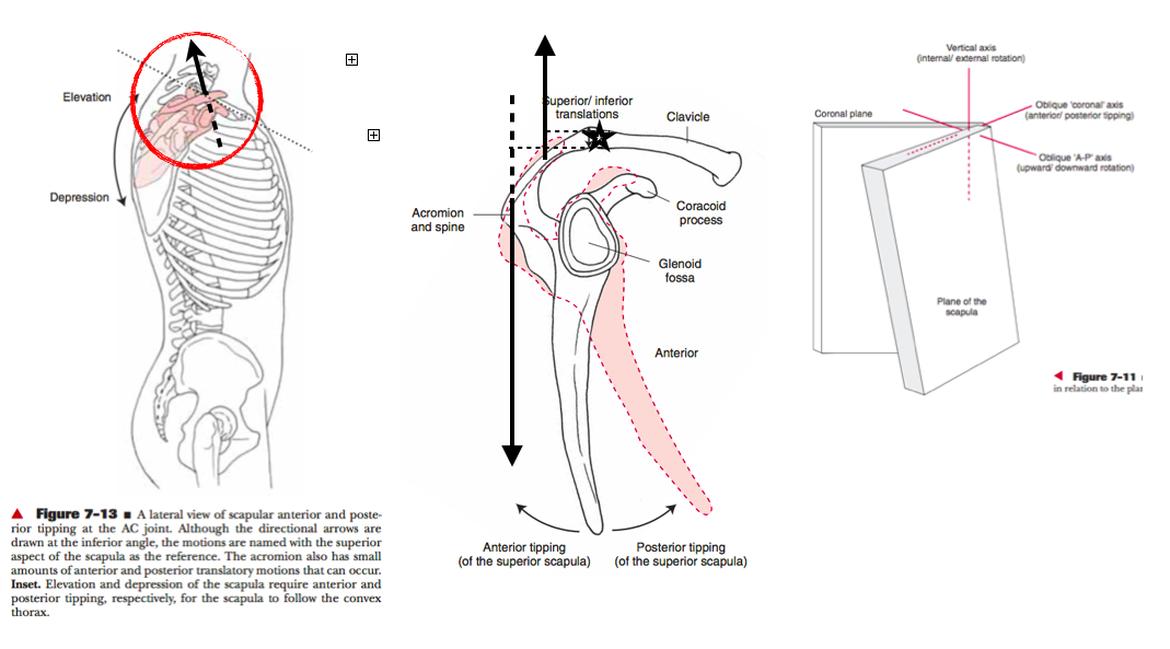 Levangie/Norkin. Joint Structure and Function.