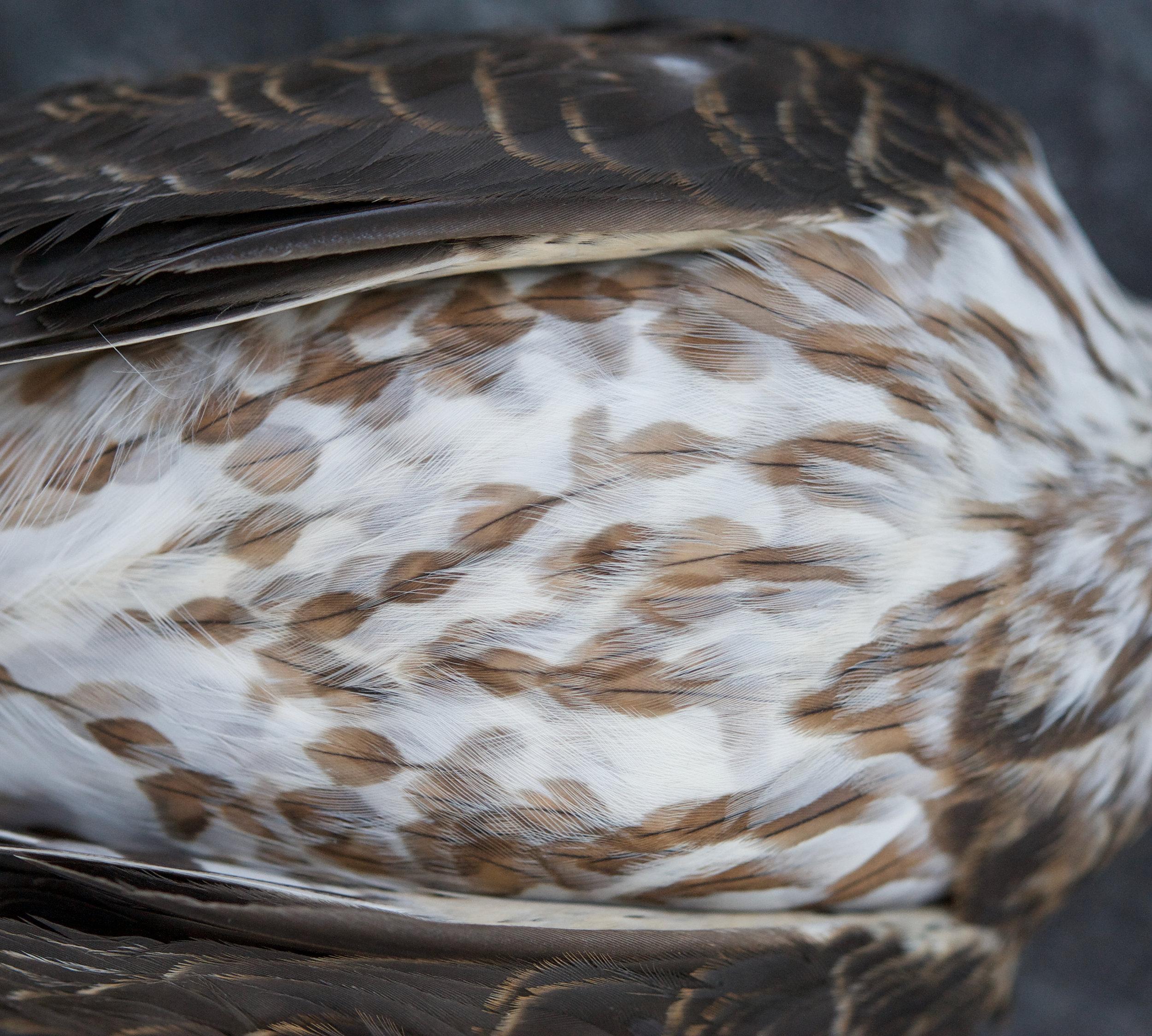 feathered friend (photo: george billard)