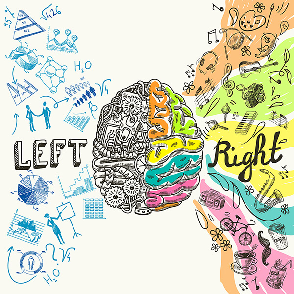 left-brain-right-brain-web.jpg