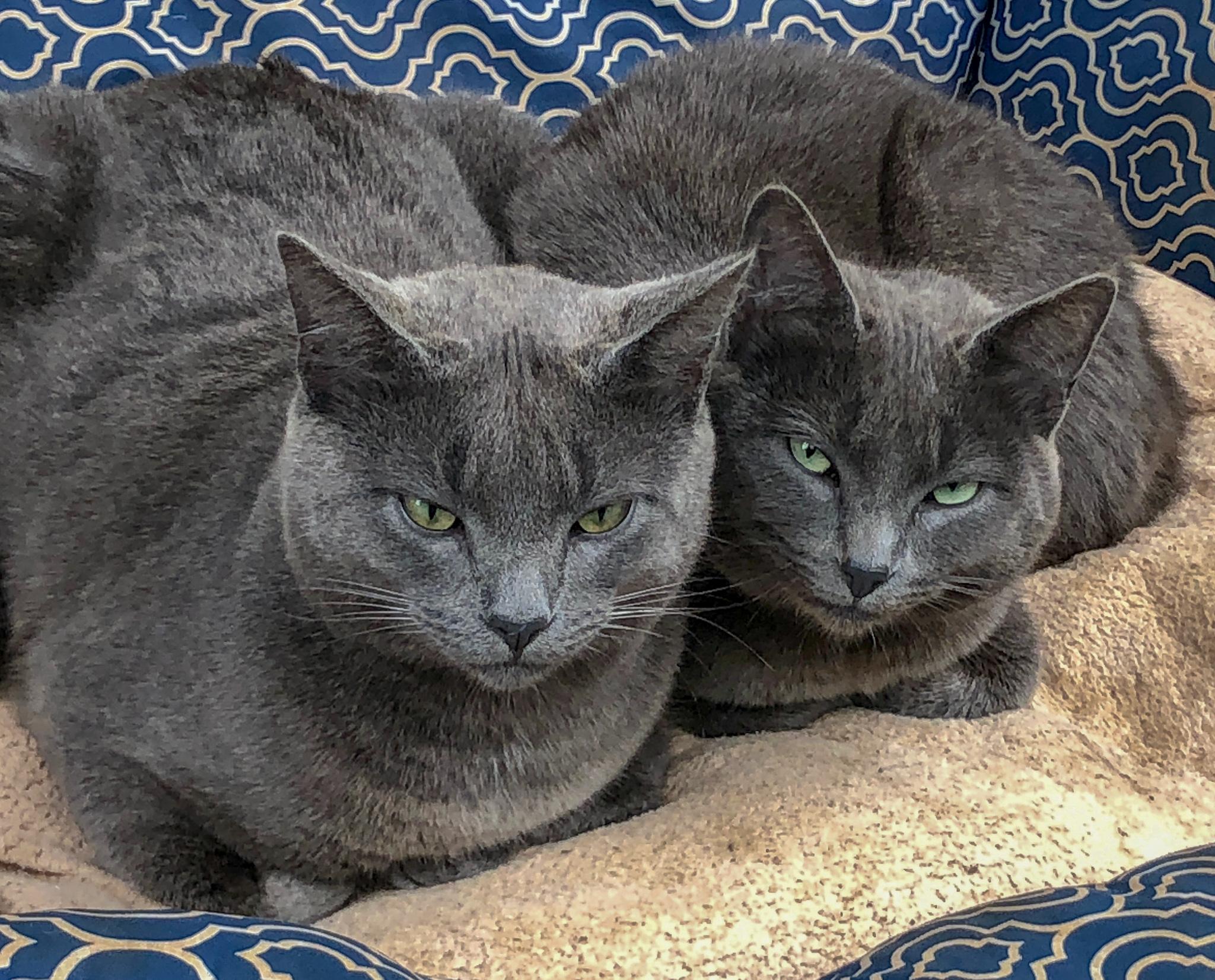 Kittens - 1.jpg