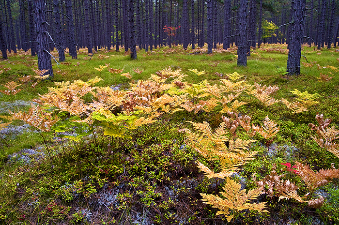 The patterns and legibility of long established plant communities motivated me. Photo by Mark Baldwin
