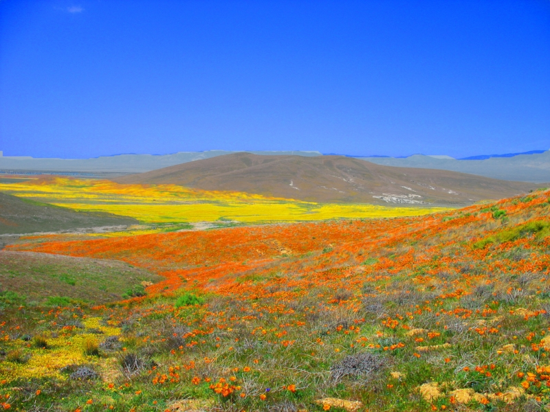 Antelope Valley Wildflower Preserve
