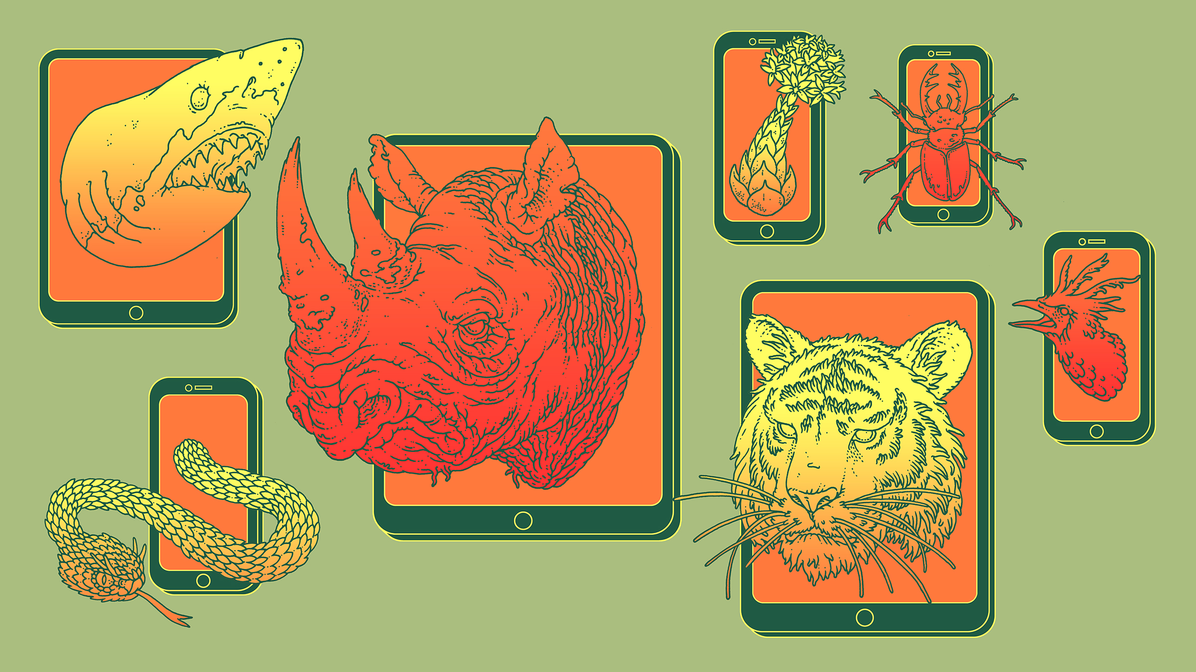 Yale 360: Unnatural Surveillance: How Online Data Is Putting Species at Risk. AD Roger Cohn.  Click here for article.