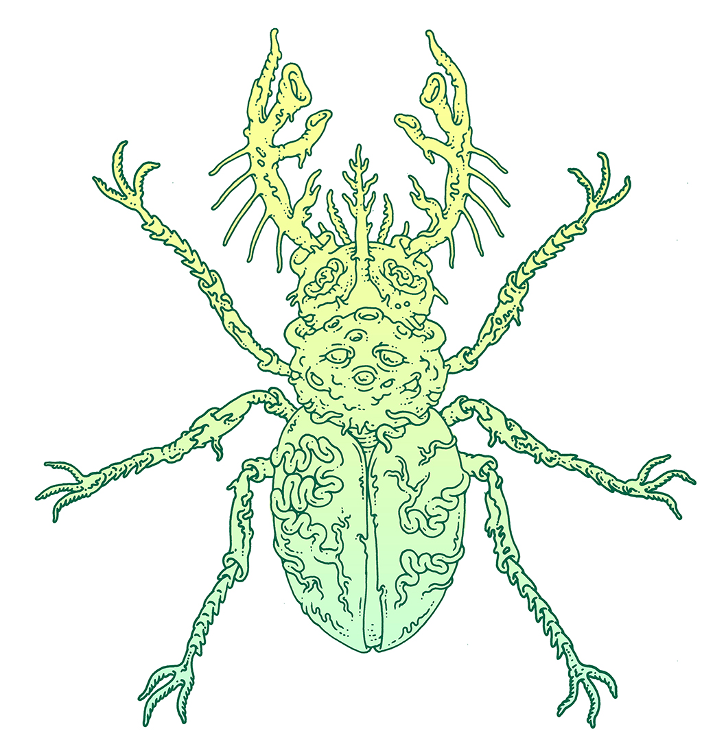 MCD Books. Memory Beetle. Borne Bestiary By: Jeff Vandermeer.  Click here for site.