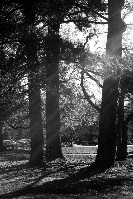 Trees in the Sun, 30x40 cm (11.7x16.5 in), digital print