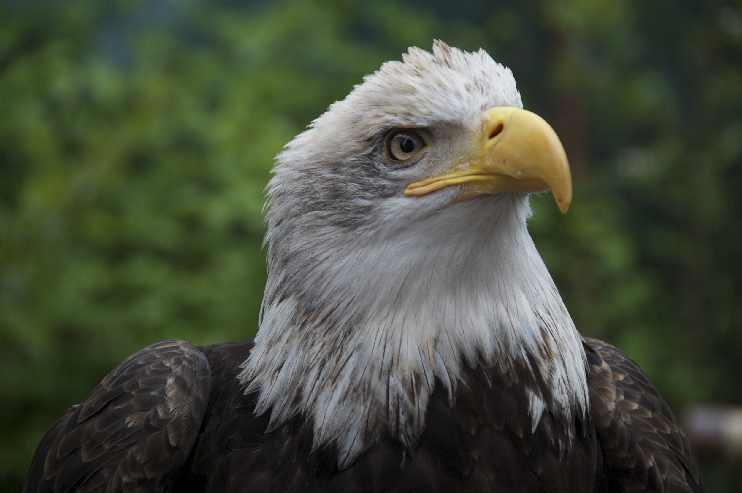 ScottVomvolakis_VomvoVisionz__eagle2.jpg