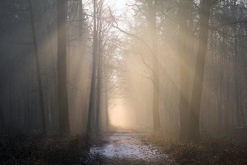blog forest.jpg