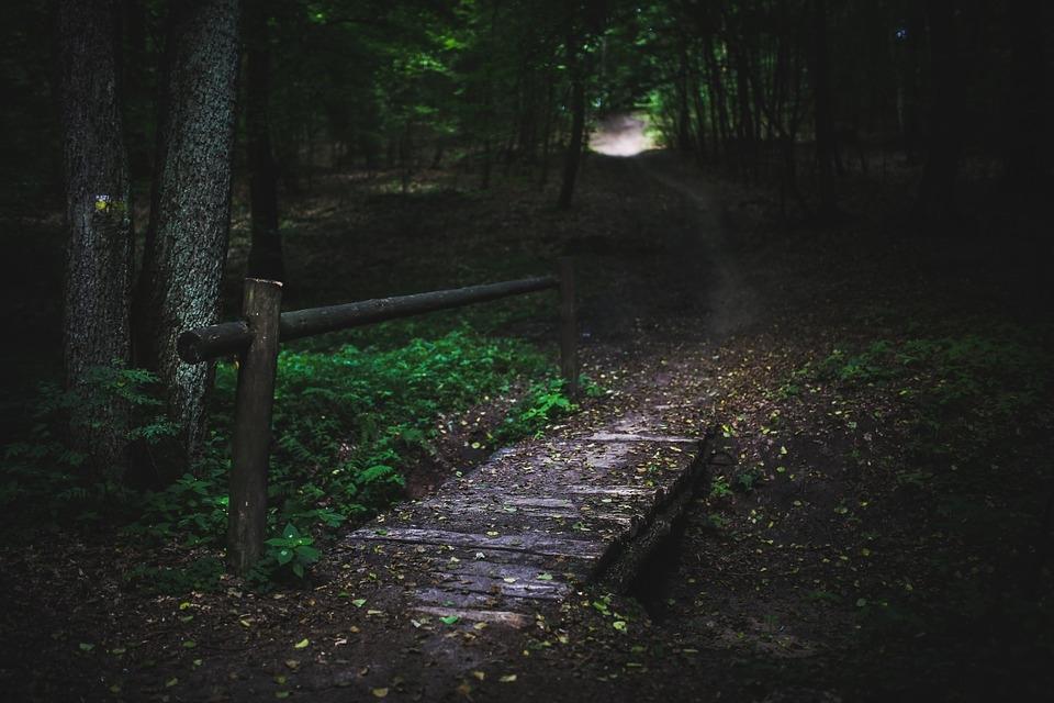 blog forest bridge path.jpg
