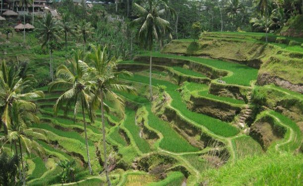 Ubud-Tegallalang-Rice-Terraces.jpg