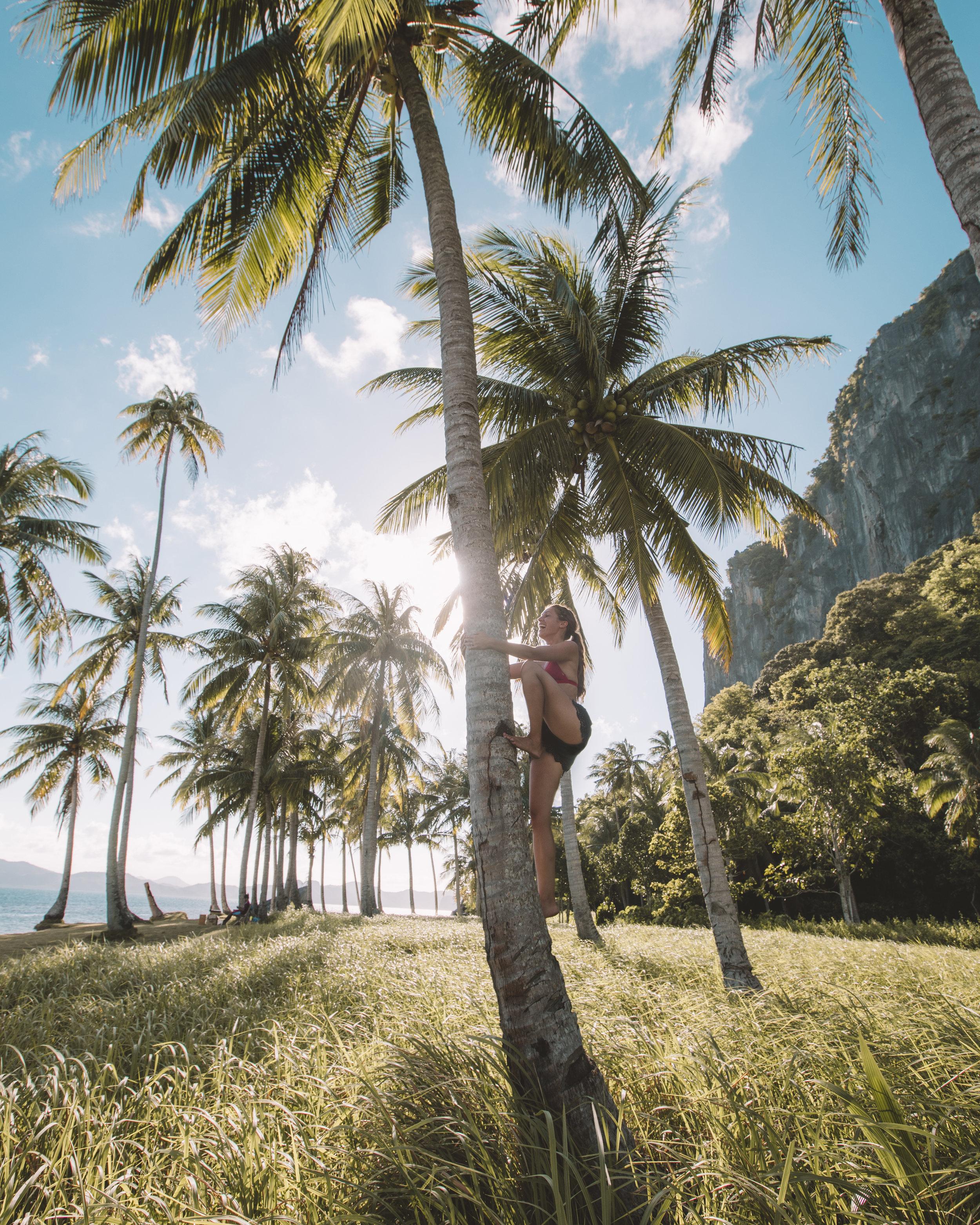 palmtree.jpg