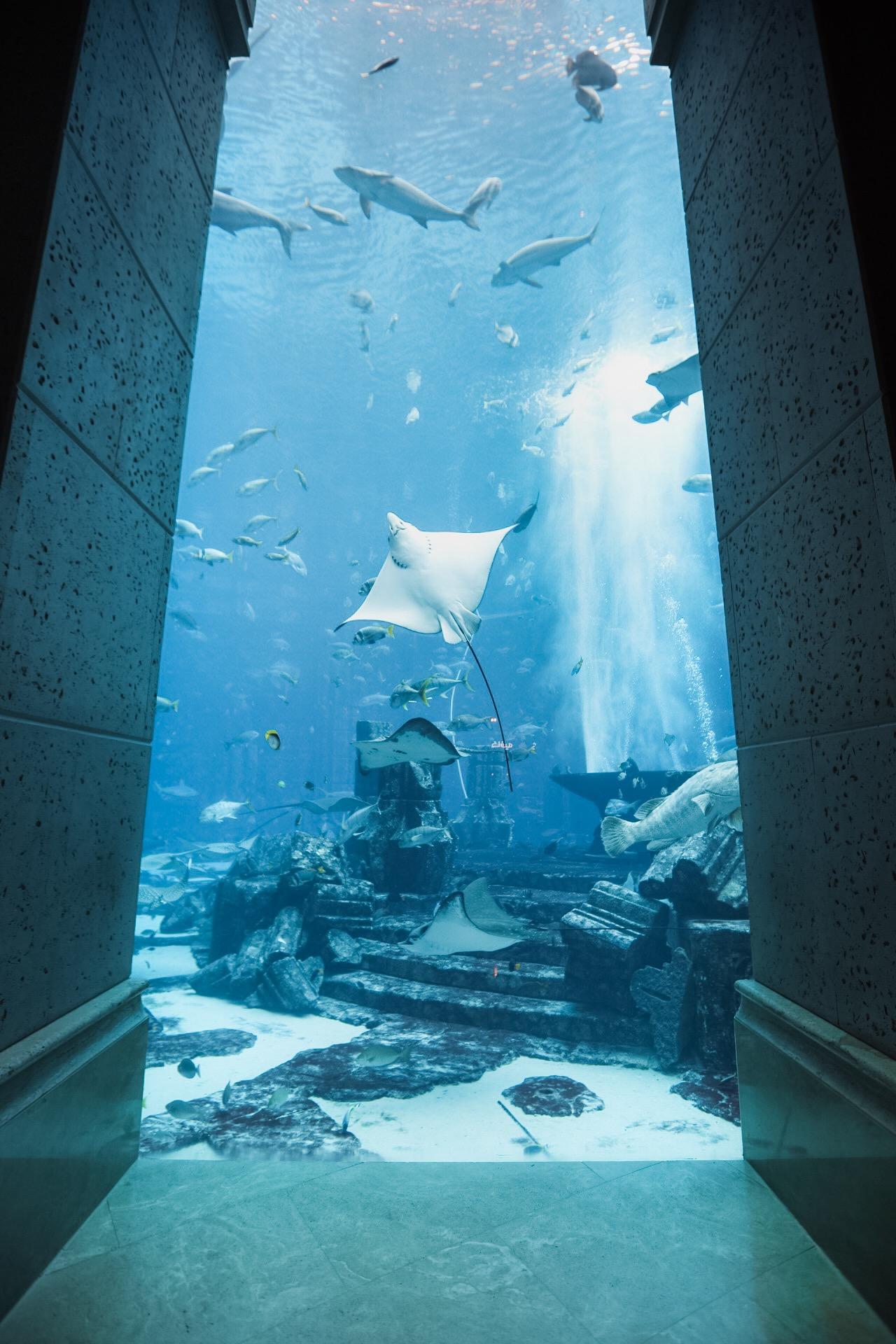 dubai_aquarium_atlantis.JPG