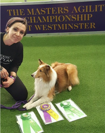 Stephanie Williams with her rescue sheltie, Mika, at their first Westminster Agility Trial. 2/11/17