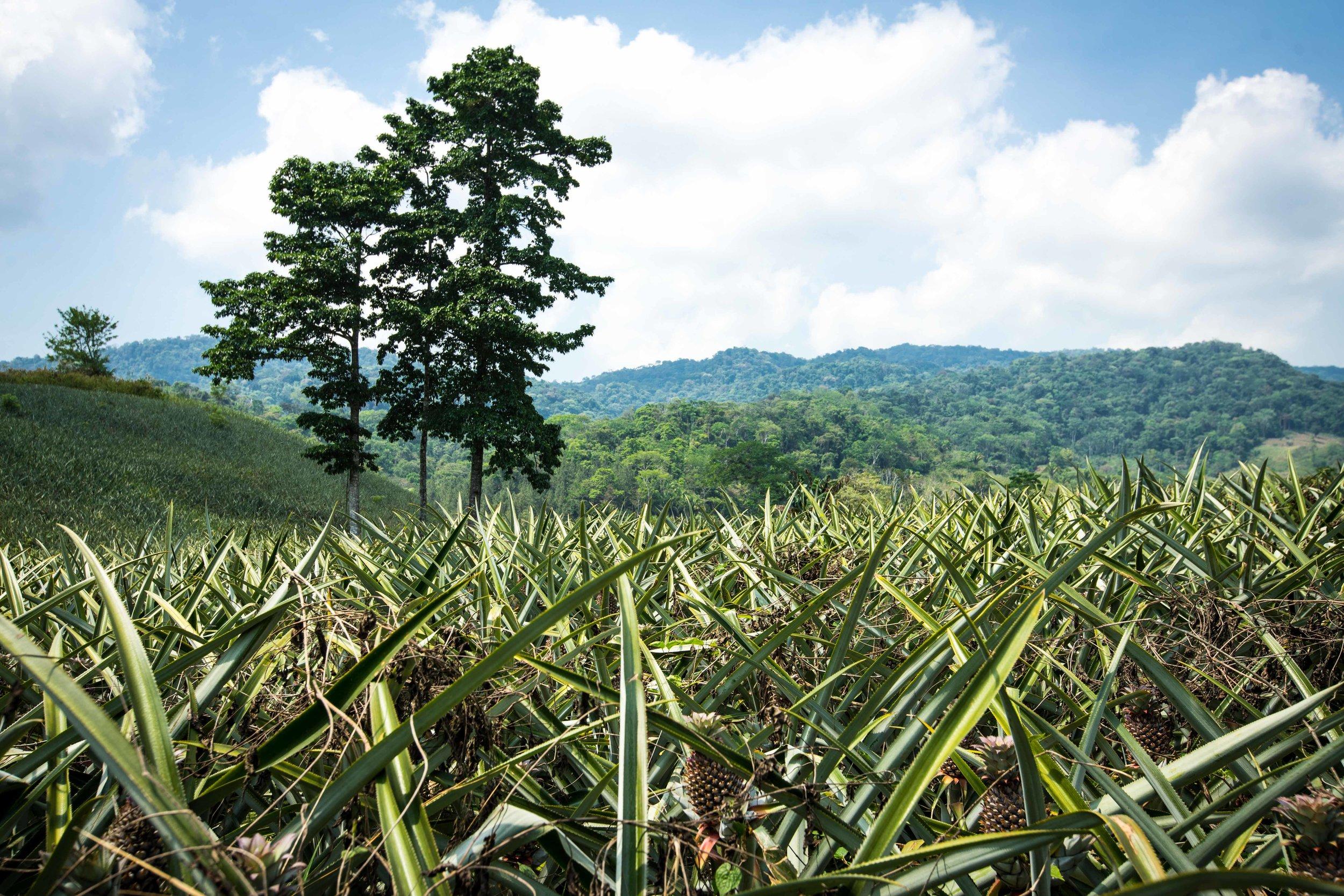Conserved FUNDAECO farmlands