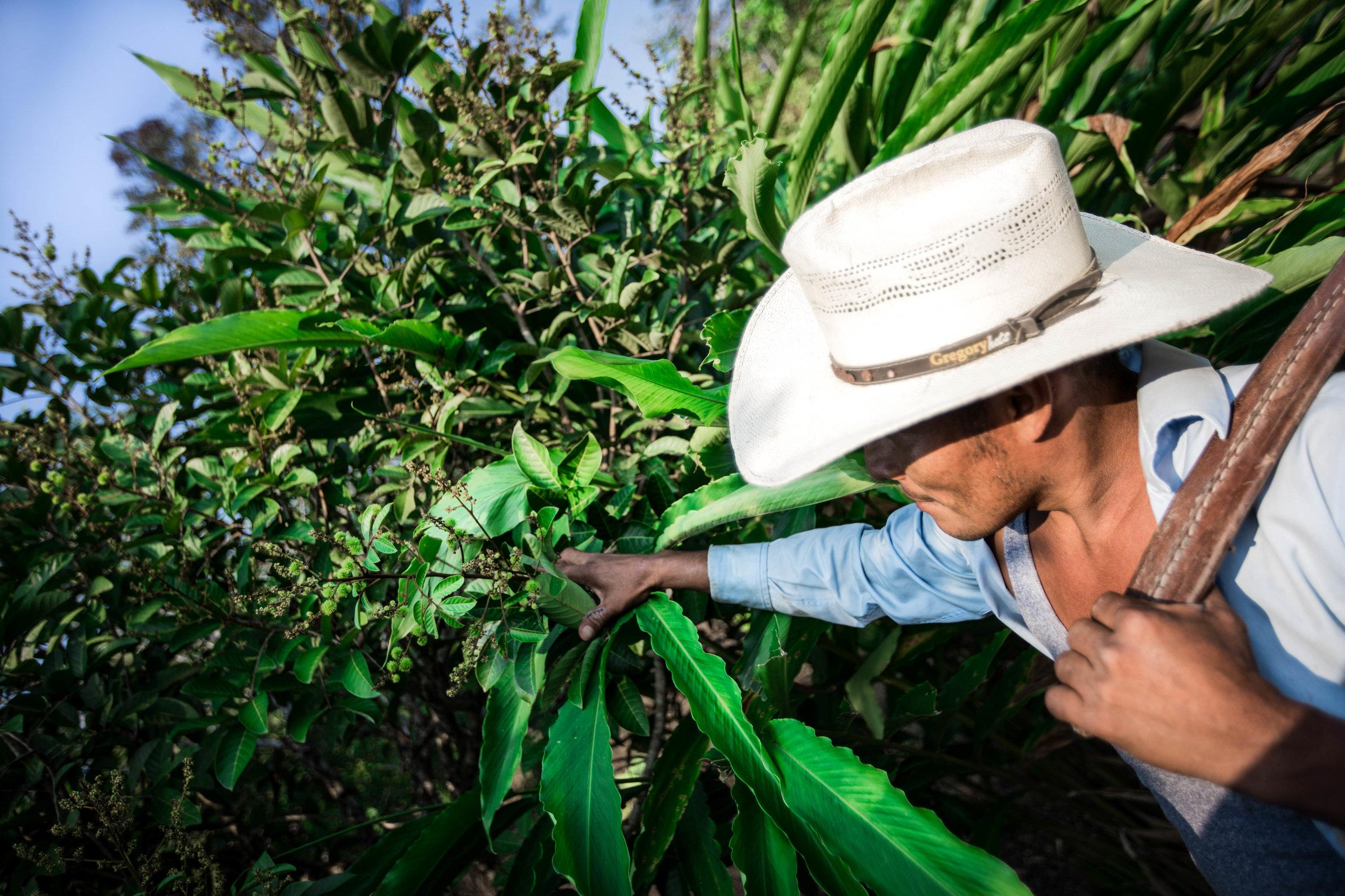 Farmer in the Cerro De San Gil