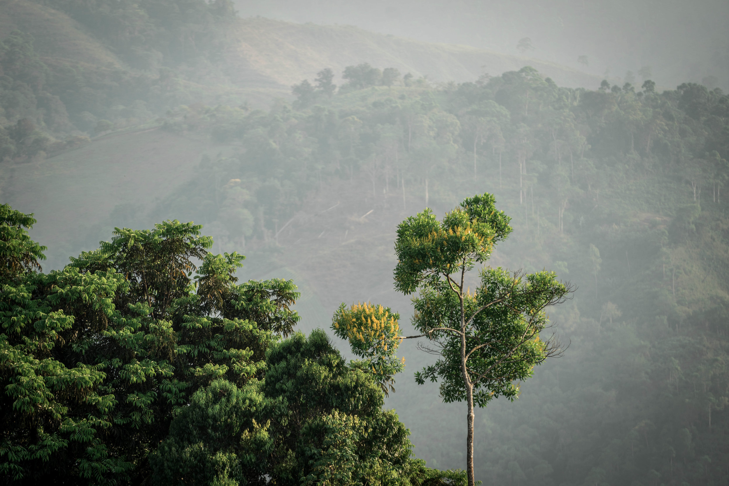 Conserved forest in Eastern Guatemala