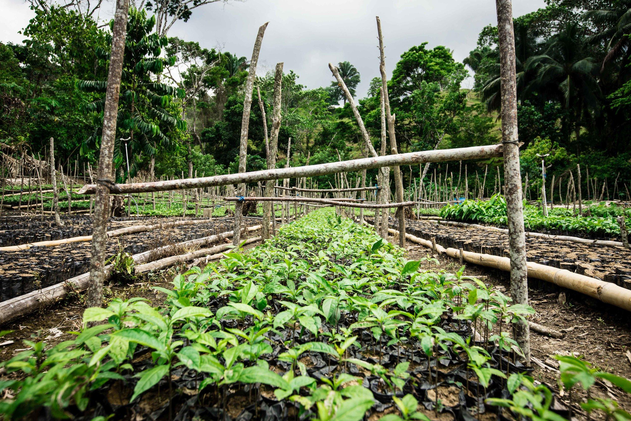 FUNDAECO's tree nursery