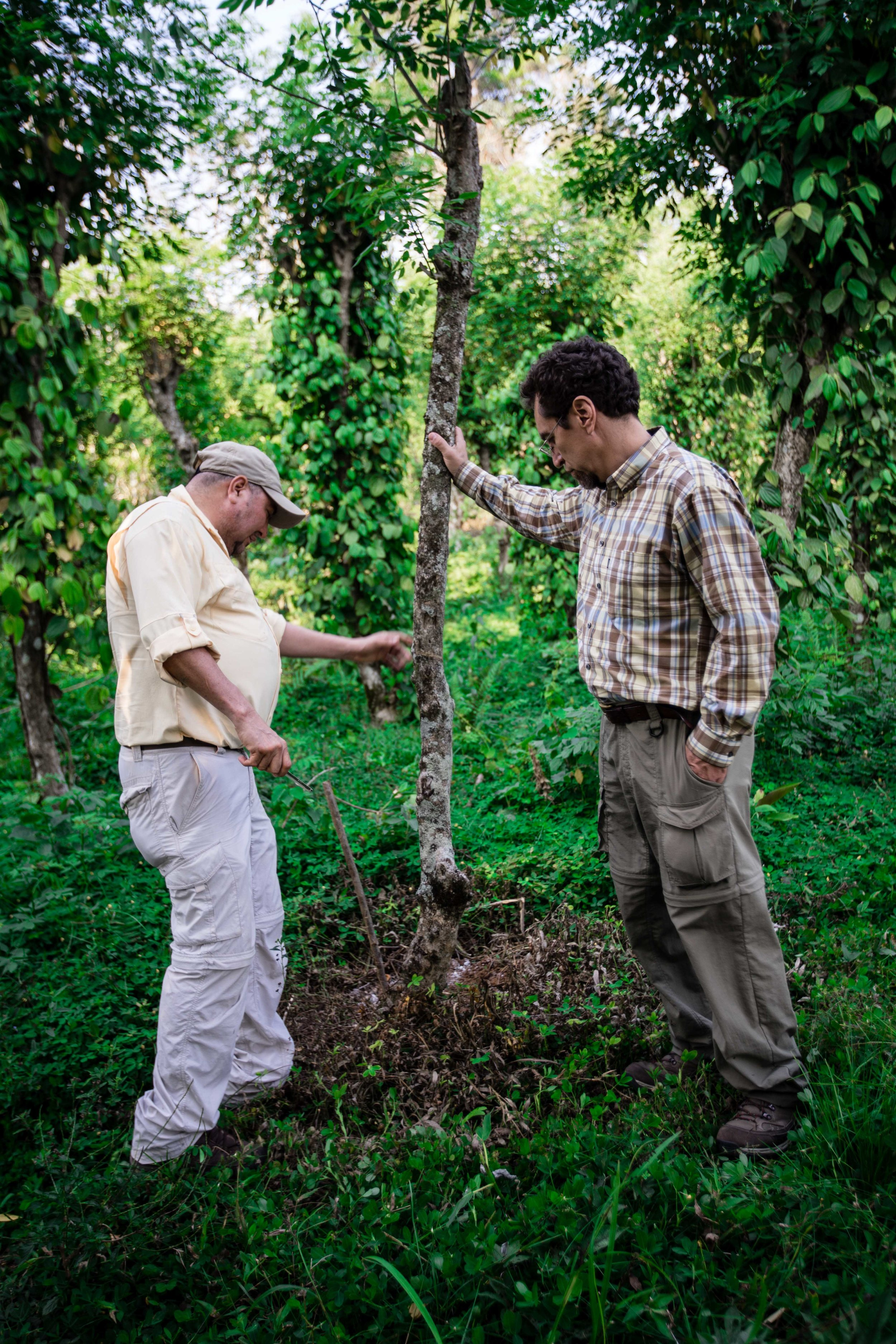 Examining the replanting of trees