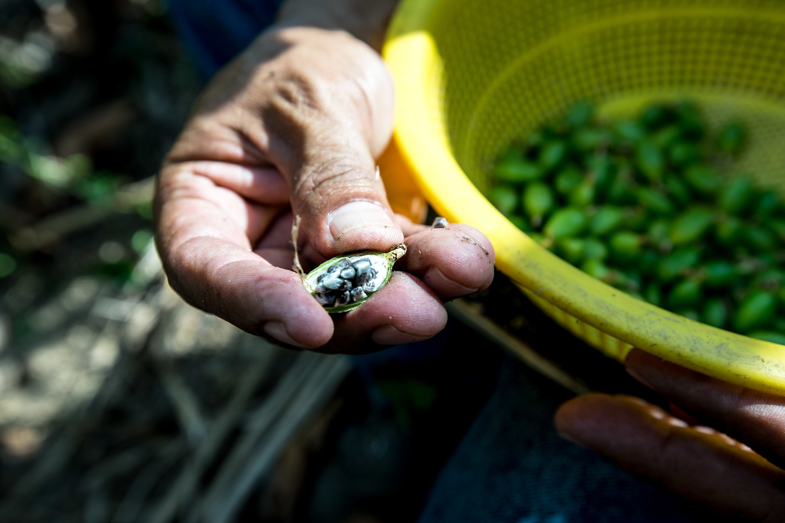 Fair trade cardamom