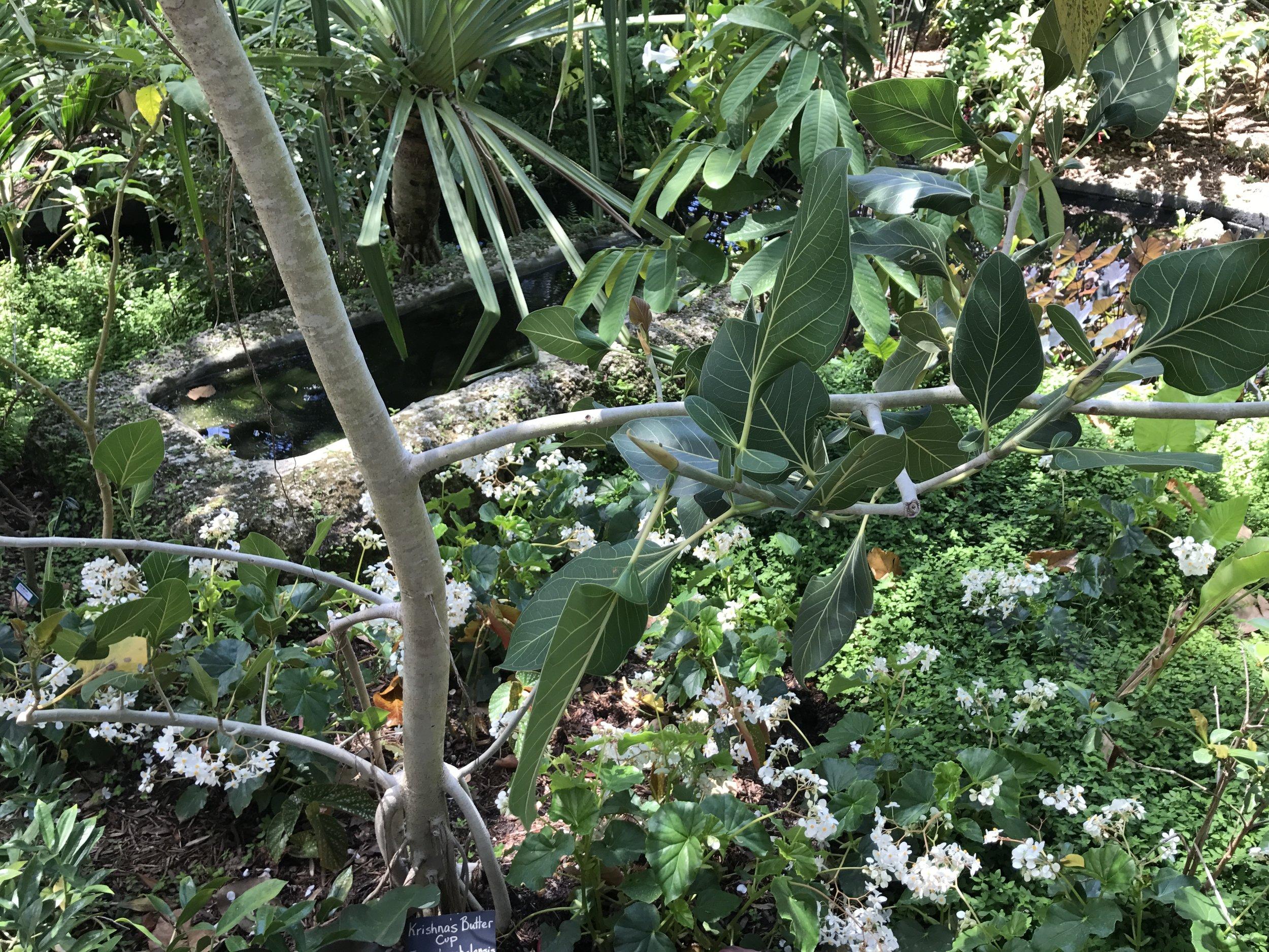 Botanical Garden, Naples, FL (5).JPG