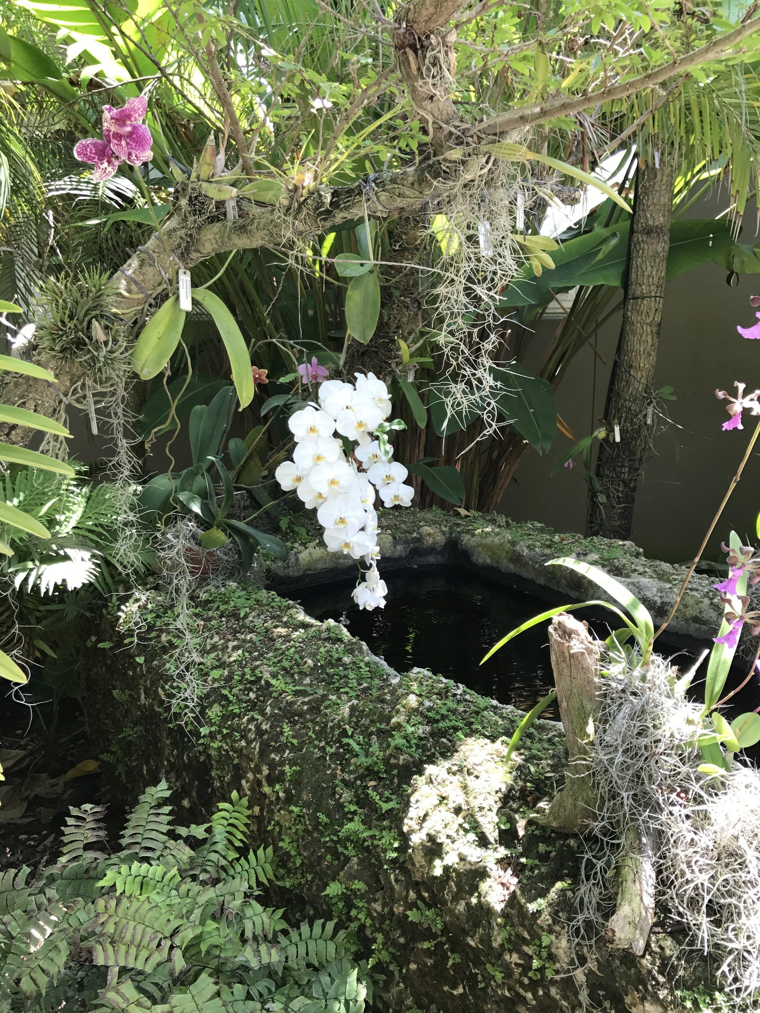 Botanical Garden, Naples, FL Orchid Garden.JPG