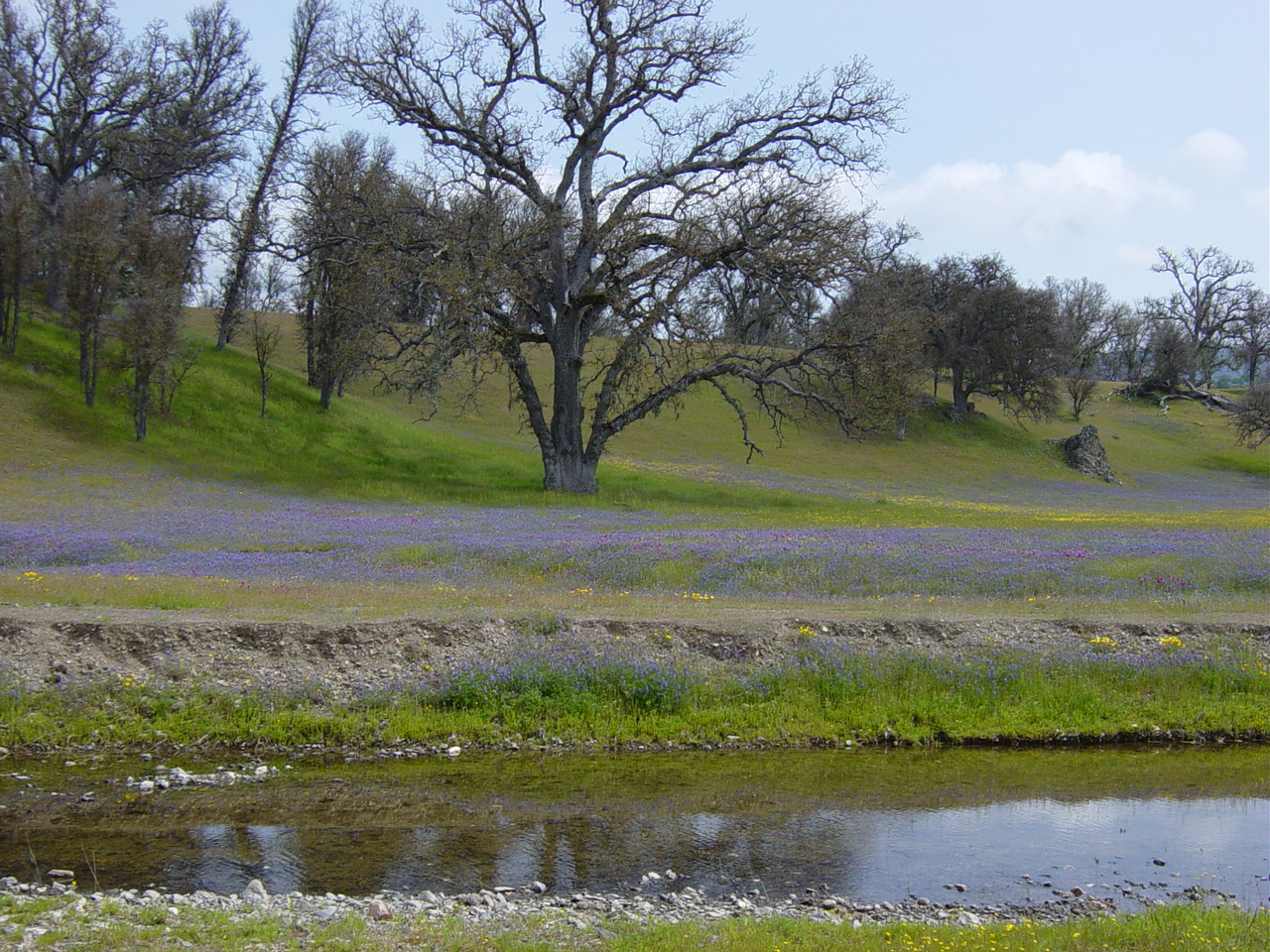 tree field 2.jpg